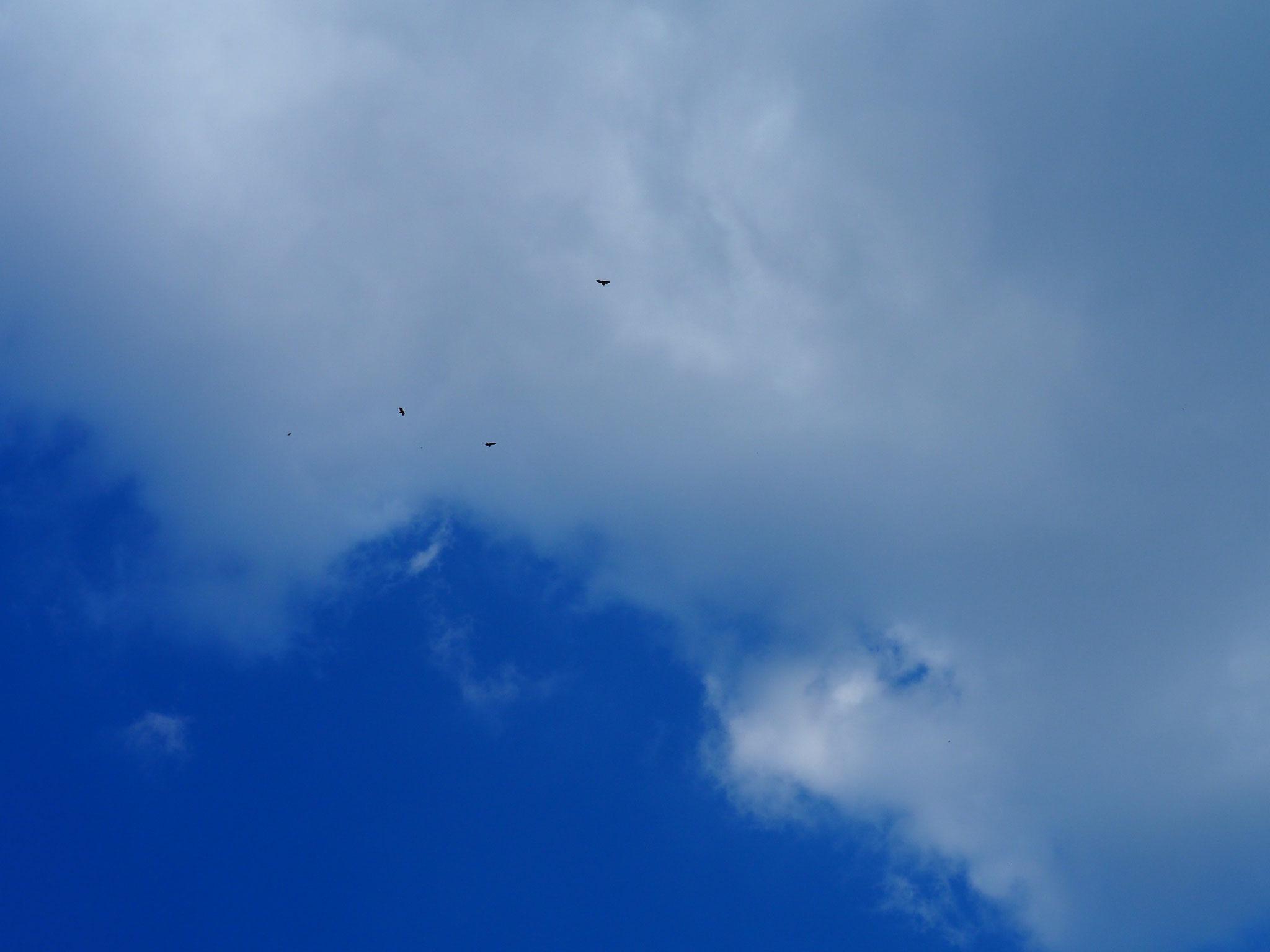 Mitte März keine Flugzeuge mehr am Himmel. Nur die Bussarde.