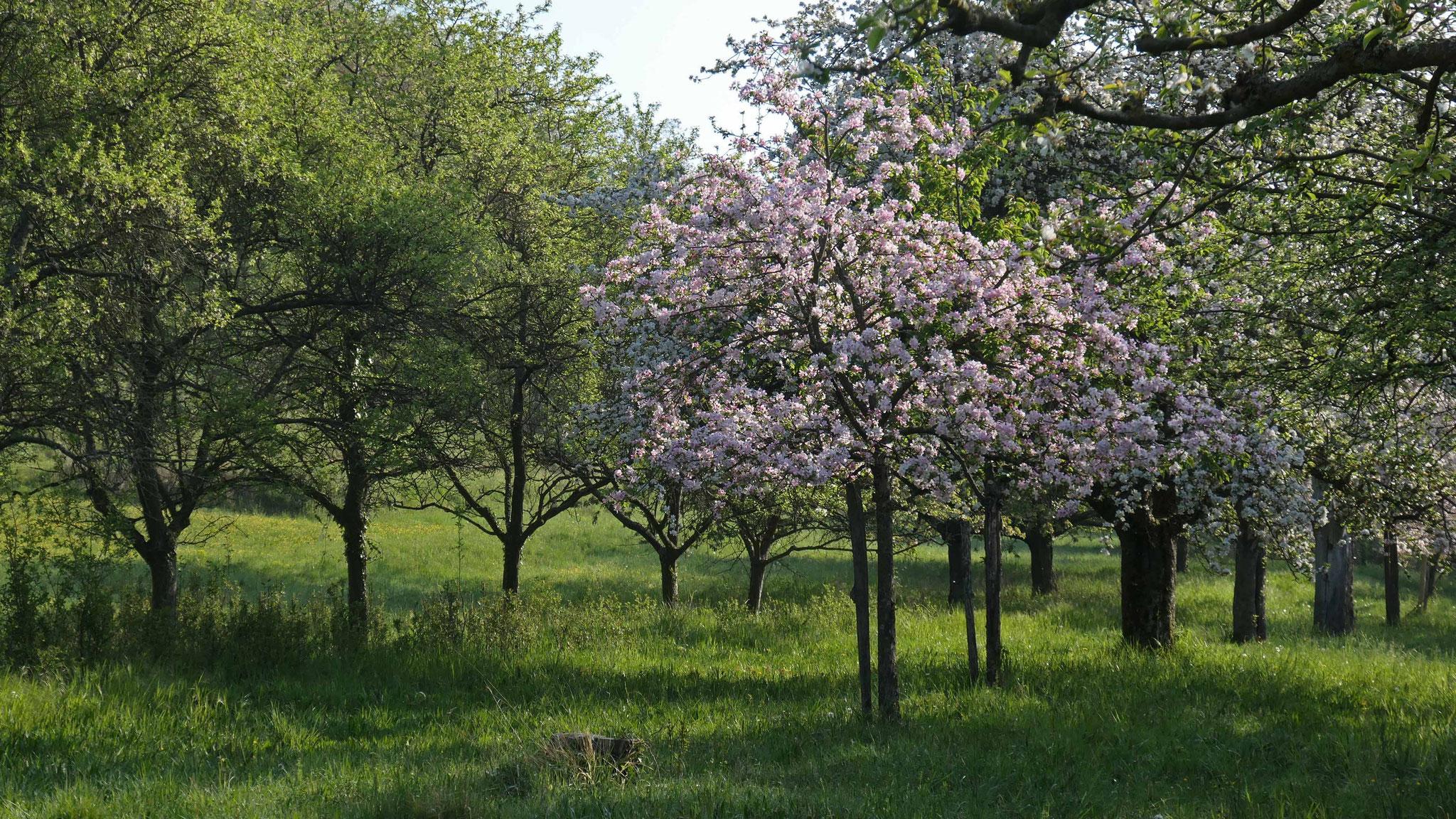 Bildergalerie Hohlenpfad südöstlich von Tairnbach (NSG Birkenwald bei Tafel 10, siehe Faltblatt), Fotos: A. Treffer