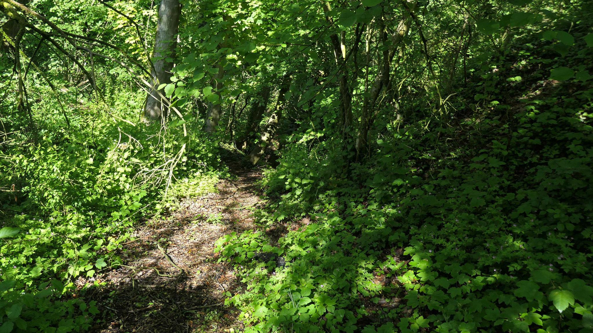 Einstieg zur Birkenwald-Klinge (nördlicher Teil des Birkenwald-Rundwegs, siehe Tafel 10)