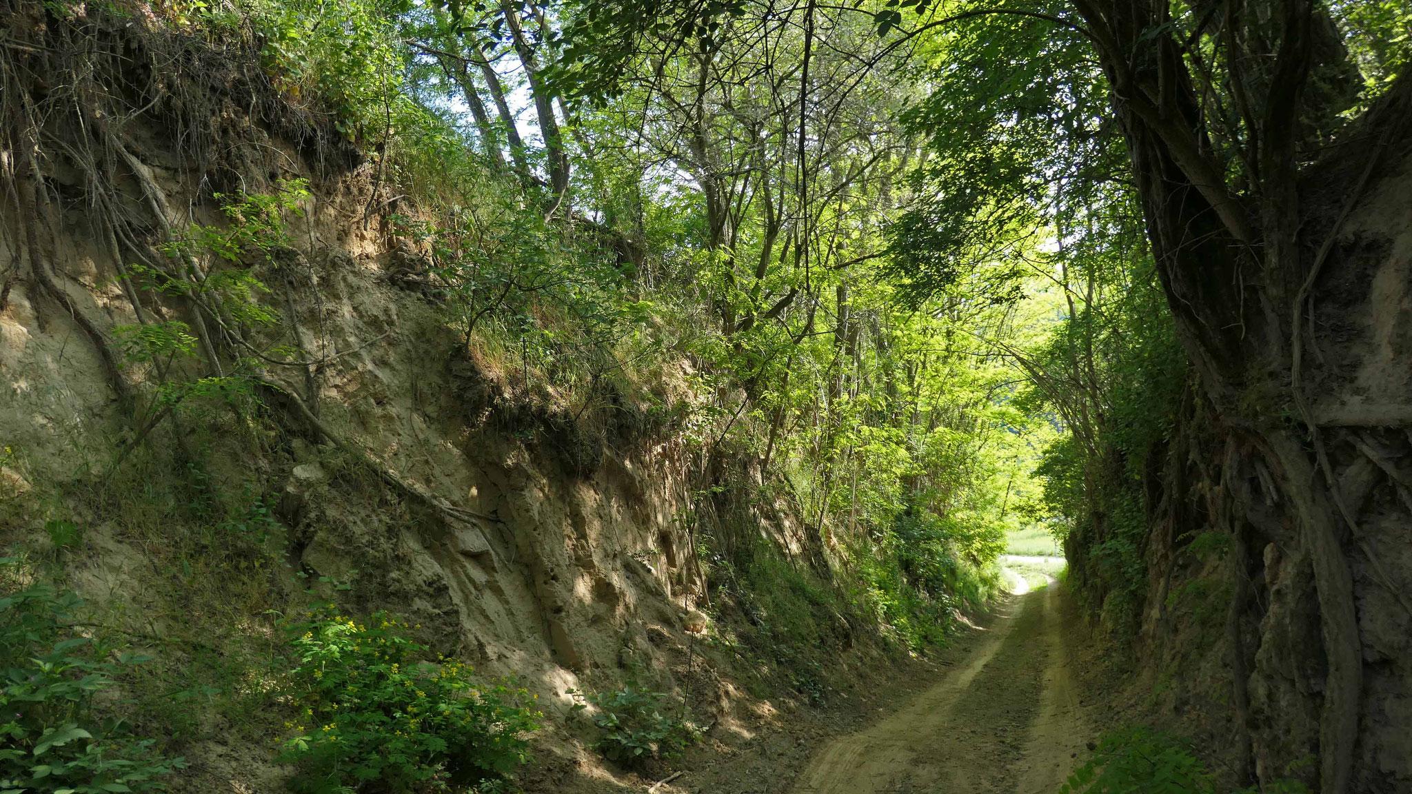 Bildergalerie Hohlenpfad südwestlich von Tairnbach (bei Tafel 6, siehe Faltblatt), Fotos: A. Treffer