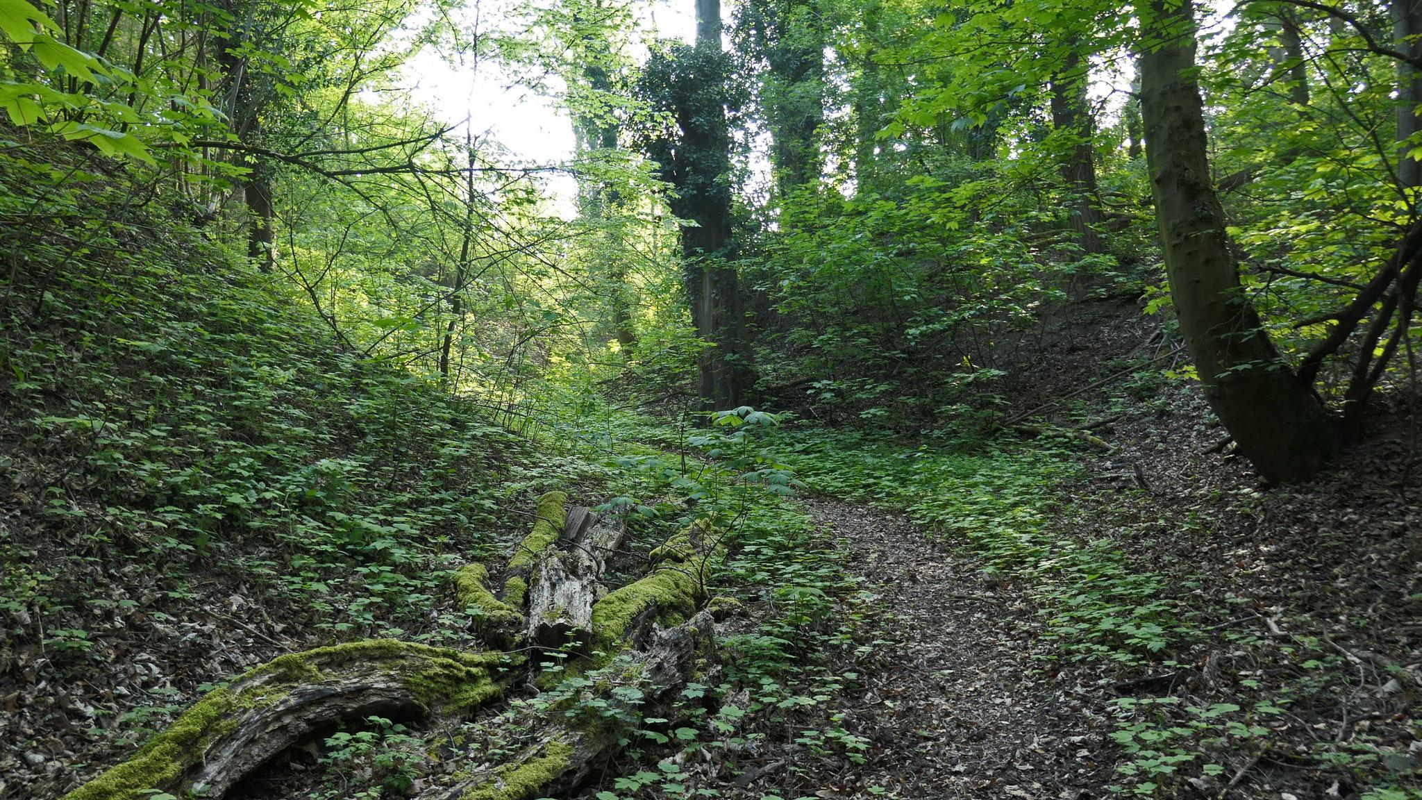 Impressionen aus der Birkenwald-Klinge (4 Fotos)