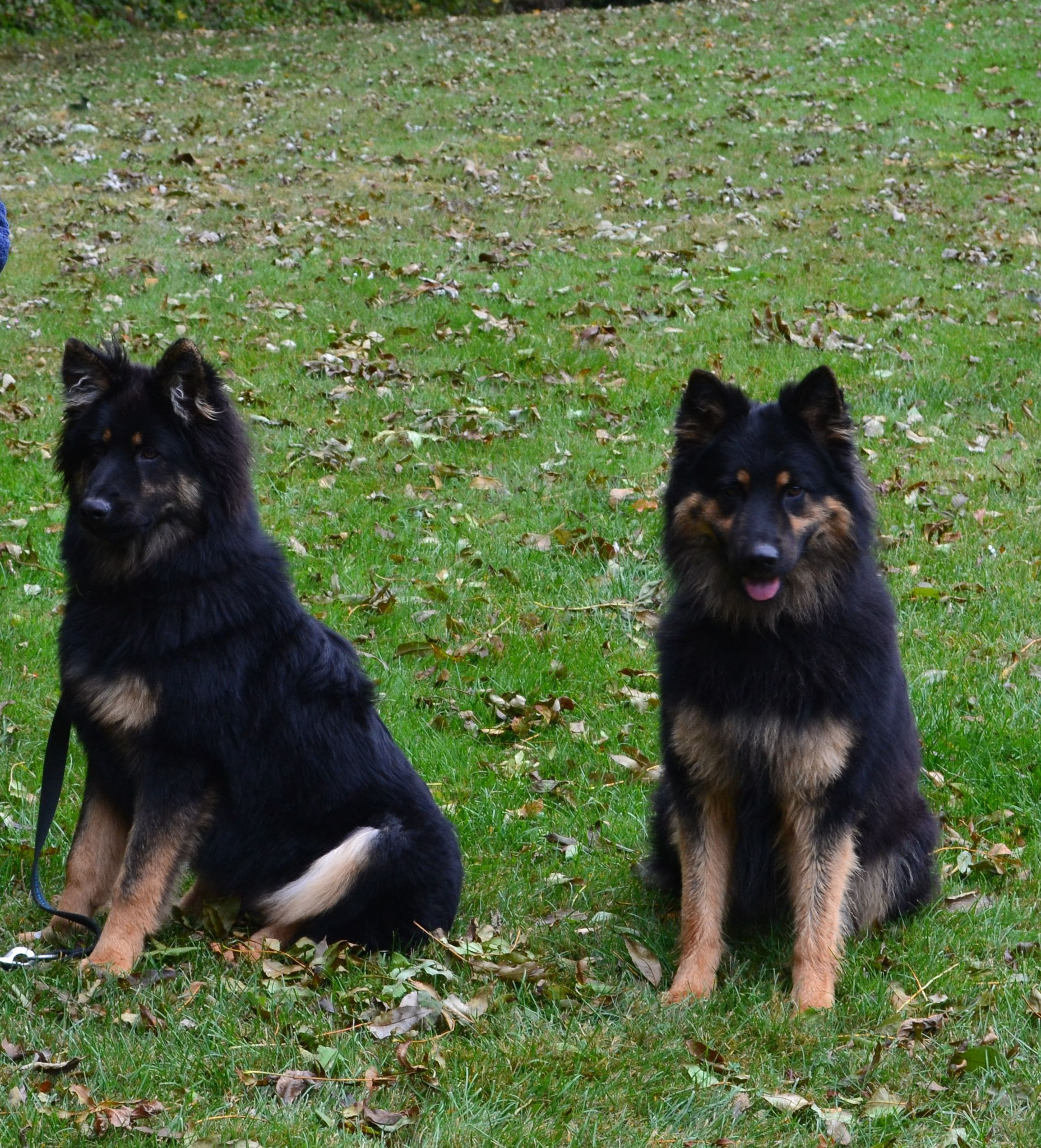 Arocs und Odin