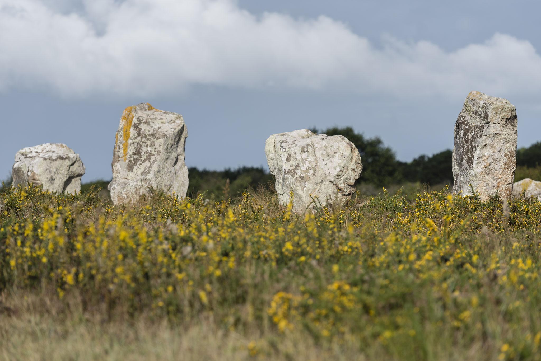 Die Menhire von Carnac