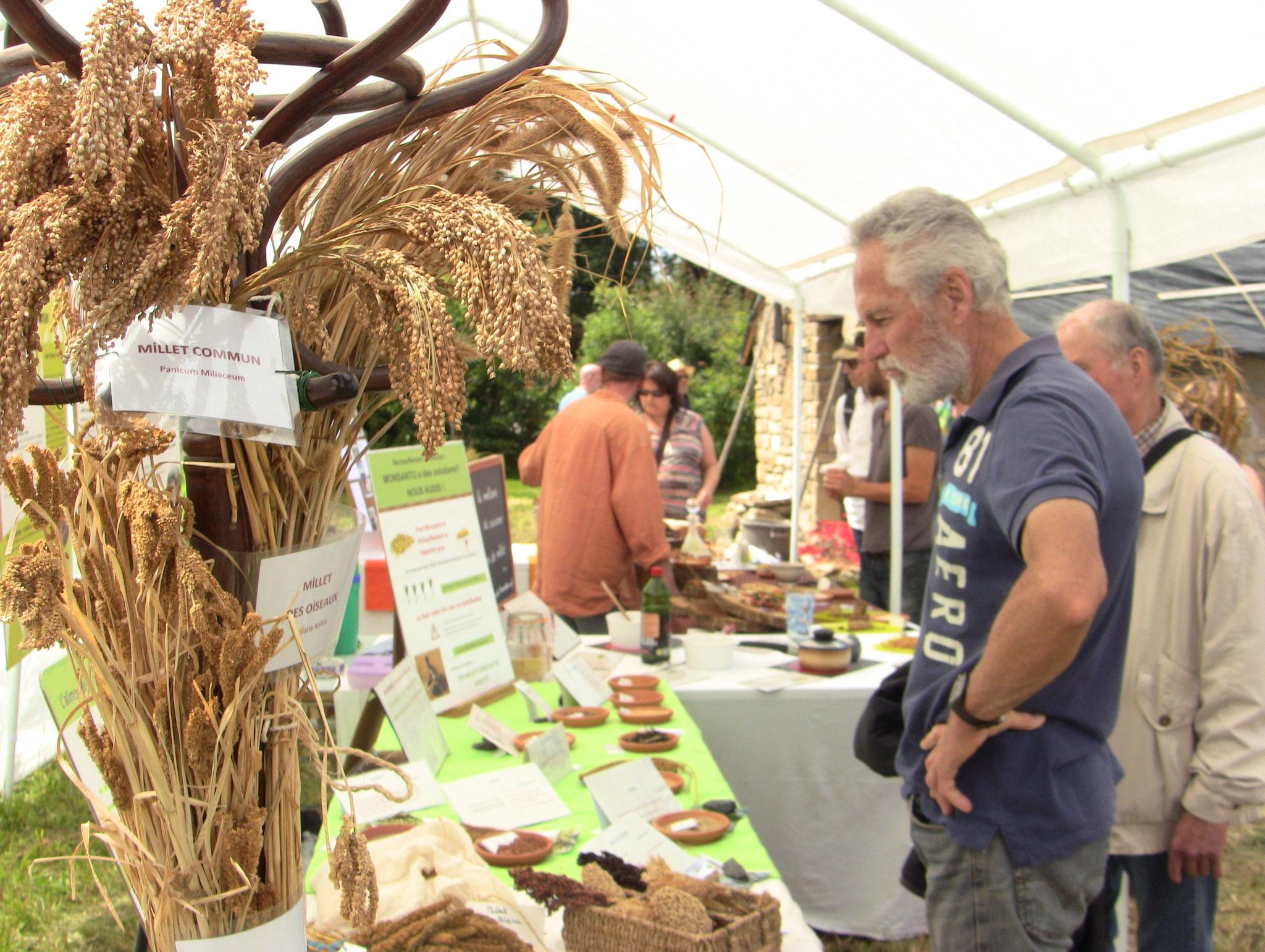 Terra Millet -  diversité dans les variétés de  millets.