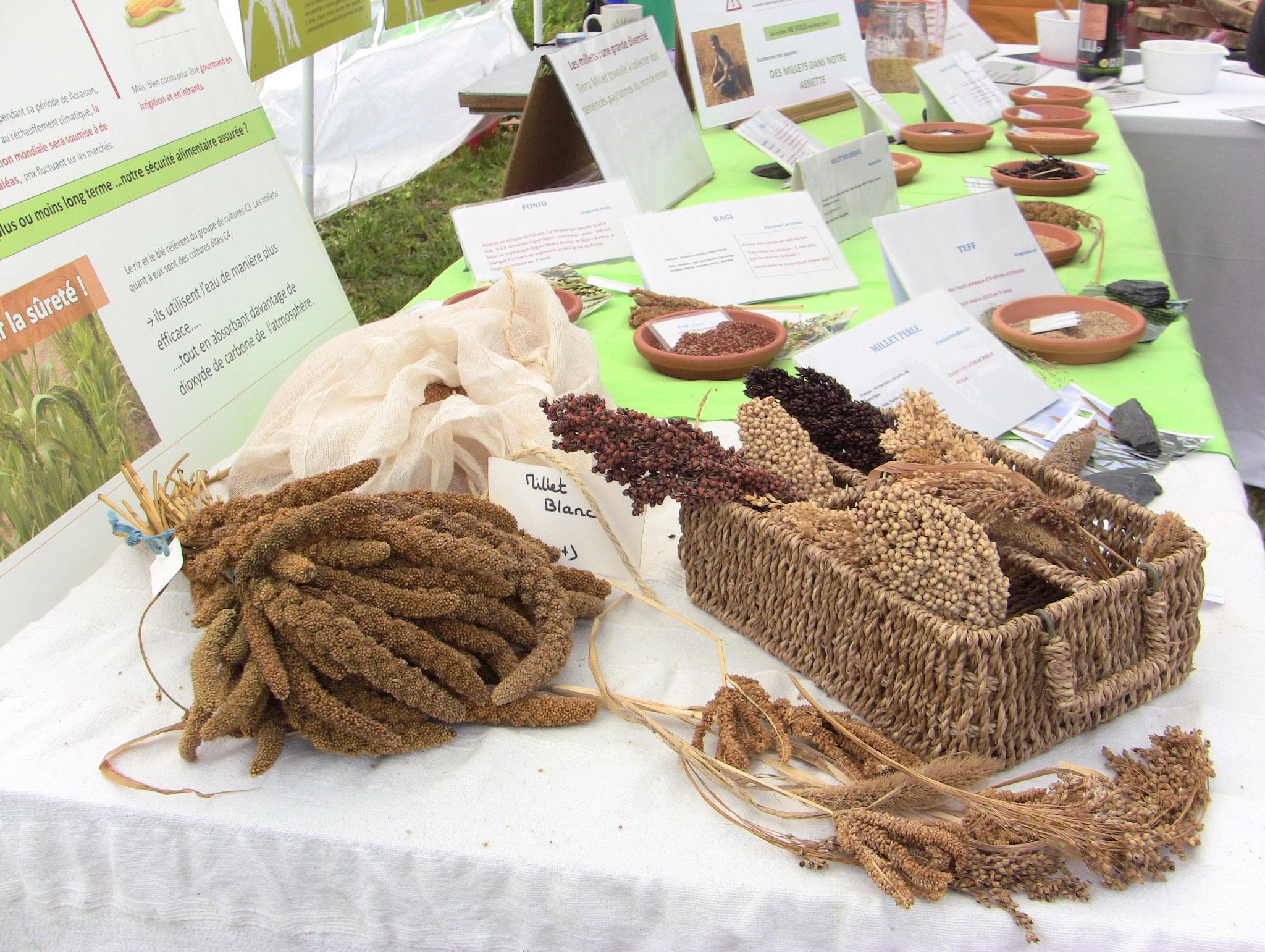 Terra Millet - diversité dans les variétés de millets et sorgos