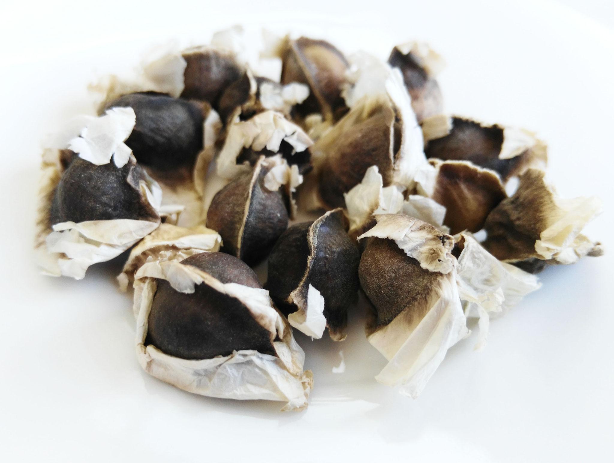 Semillas de Moringa Oleifera = 3,95 € (100 semillas)
