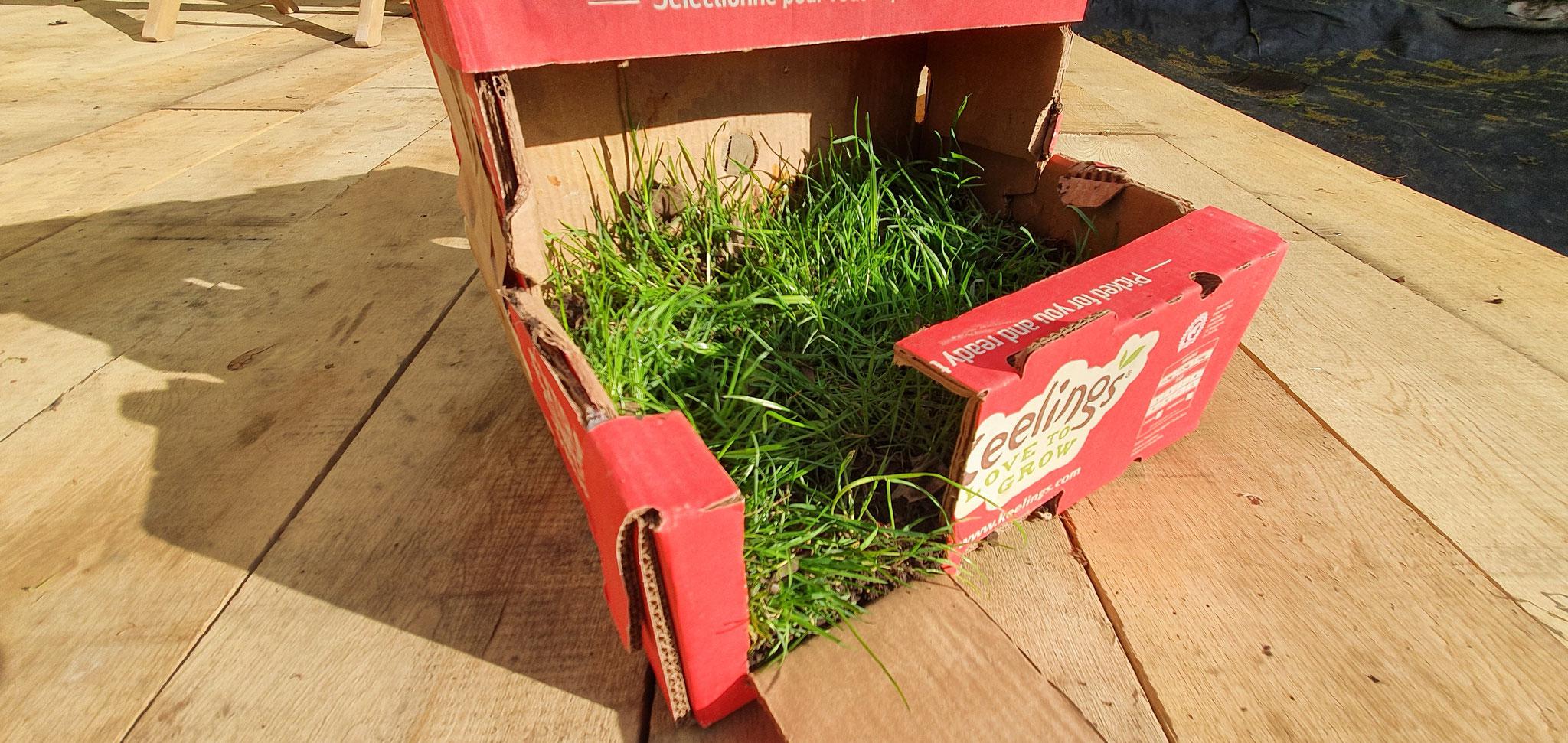 Den Boden mit einer frischen Grassode auskleiden und ...