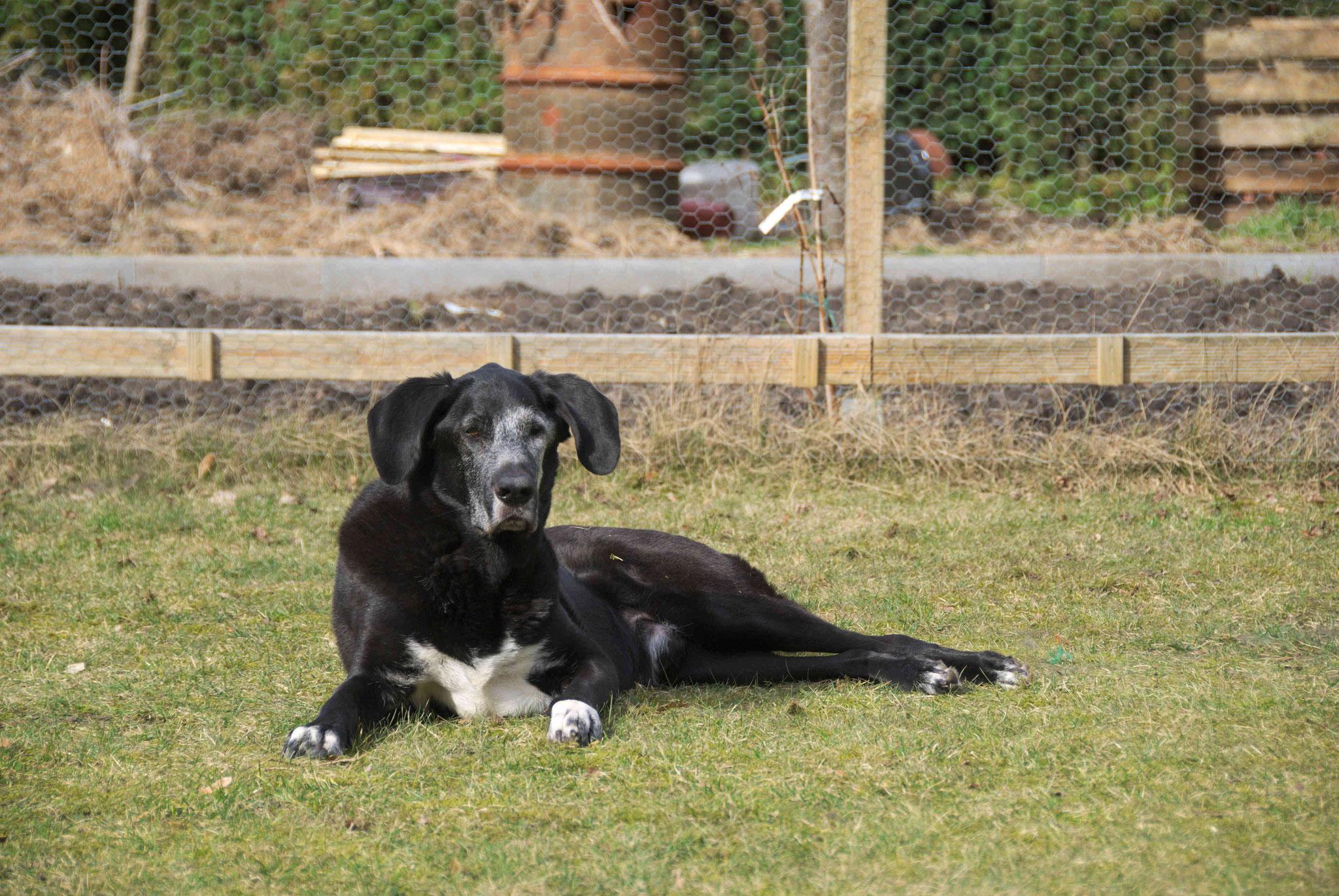 Hercules zu besuch bei uns im Garten