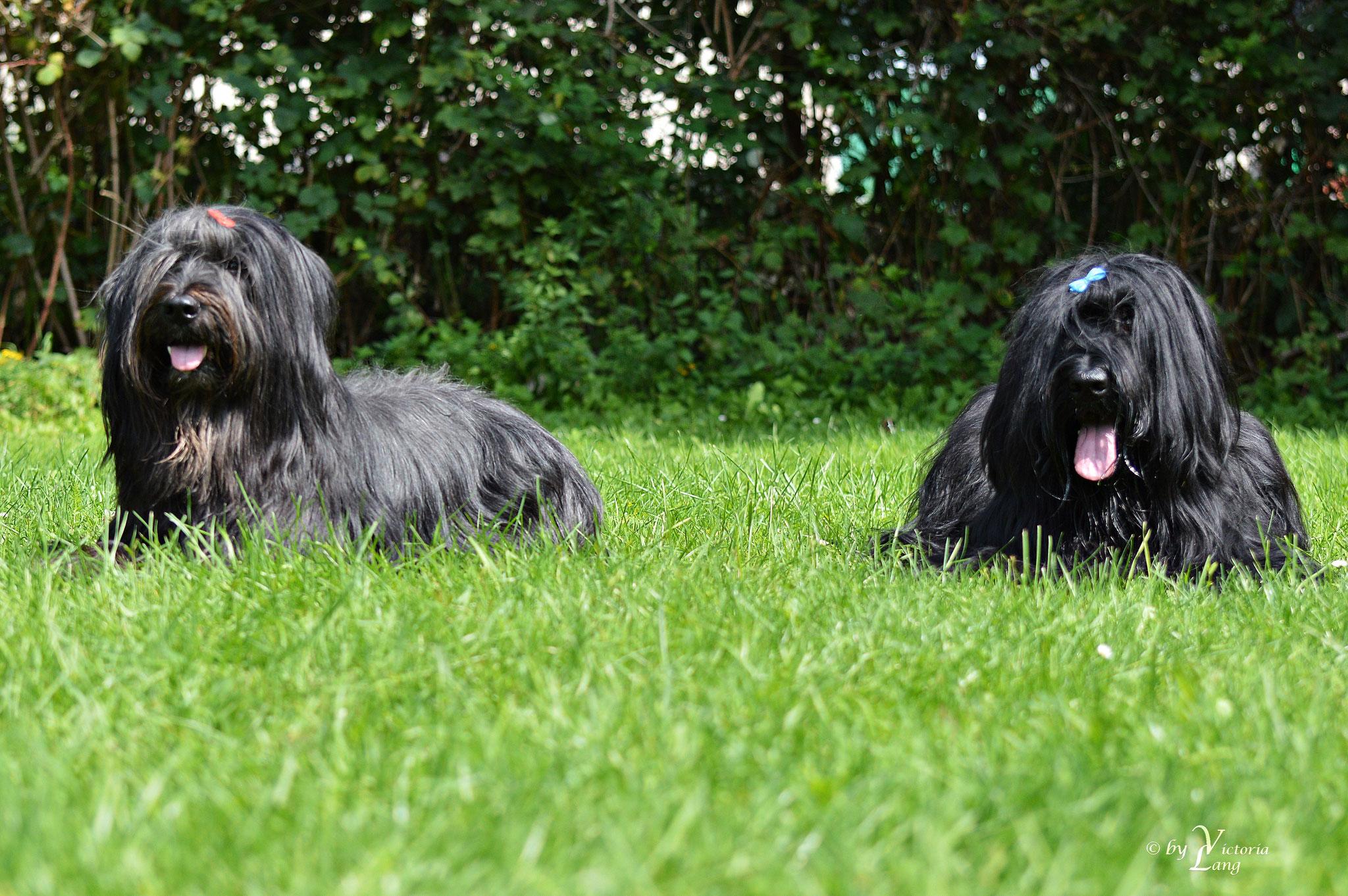 Brüderchen und Schwesterhen - Yazoo und Gimli
