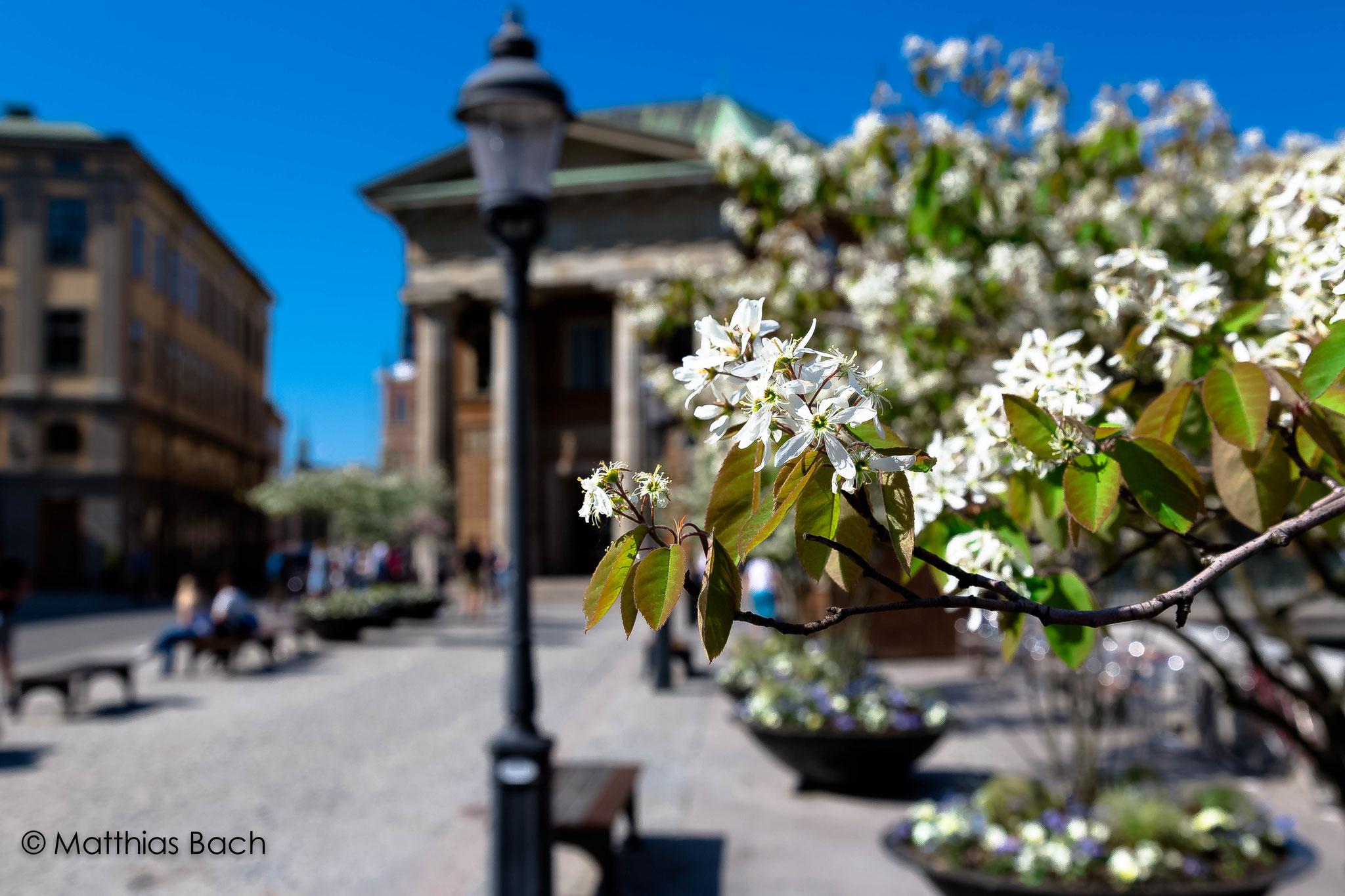 Stckholm