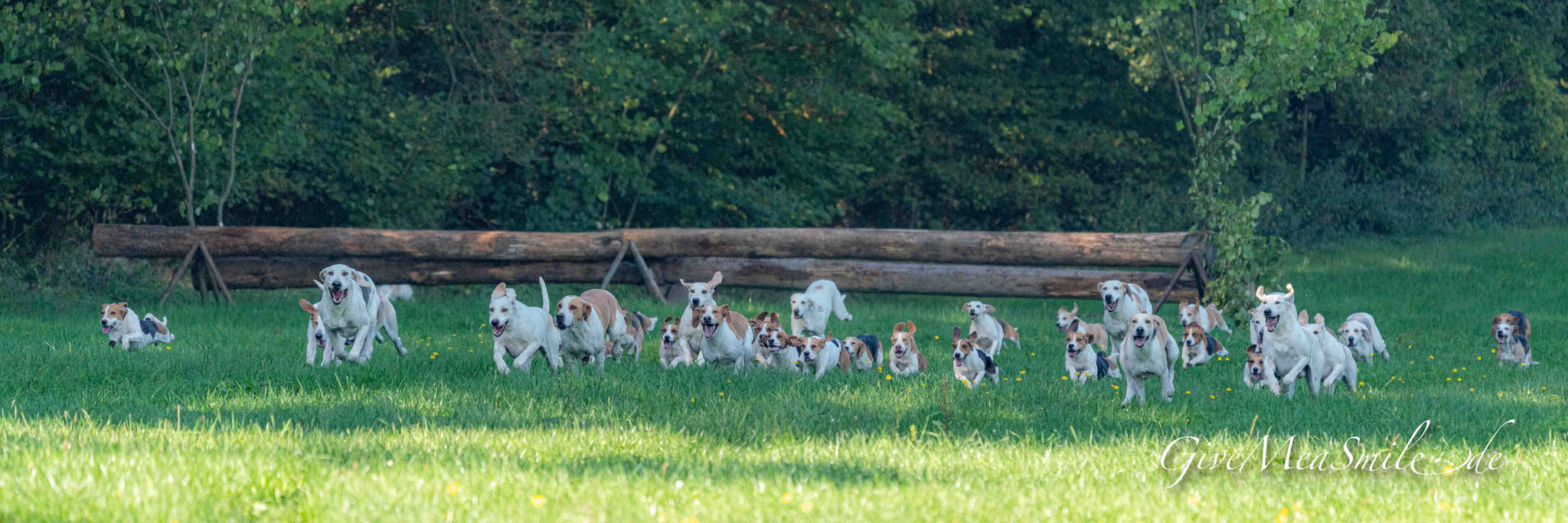 Jagdfotos vom Team @Givemeasmile.de auf der Fotojagd, Peter Jäger  #SchlossFasanerie #Fulda #Eichenzell #jagdreiterfulda #givemeasmilede #taunusmeute #foxhounds #beagles #jagdreiten #schleppjagd