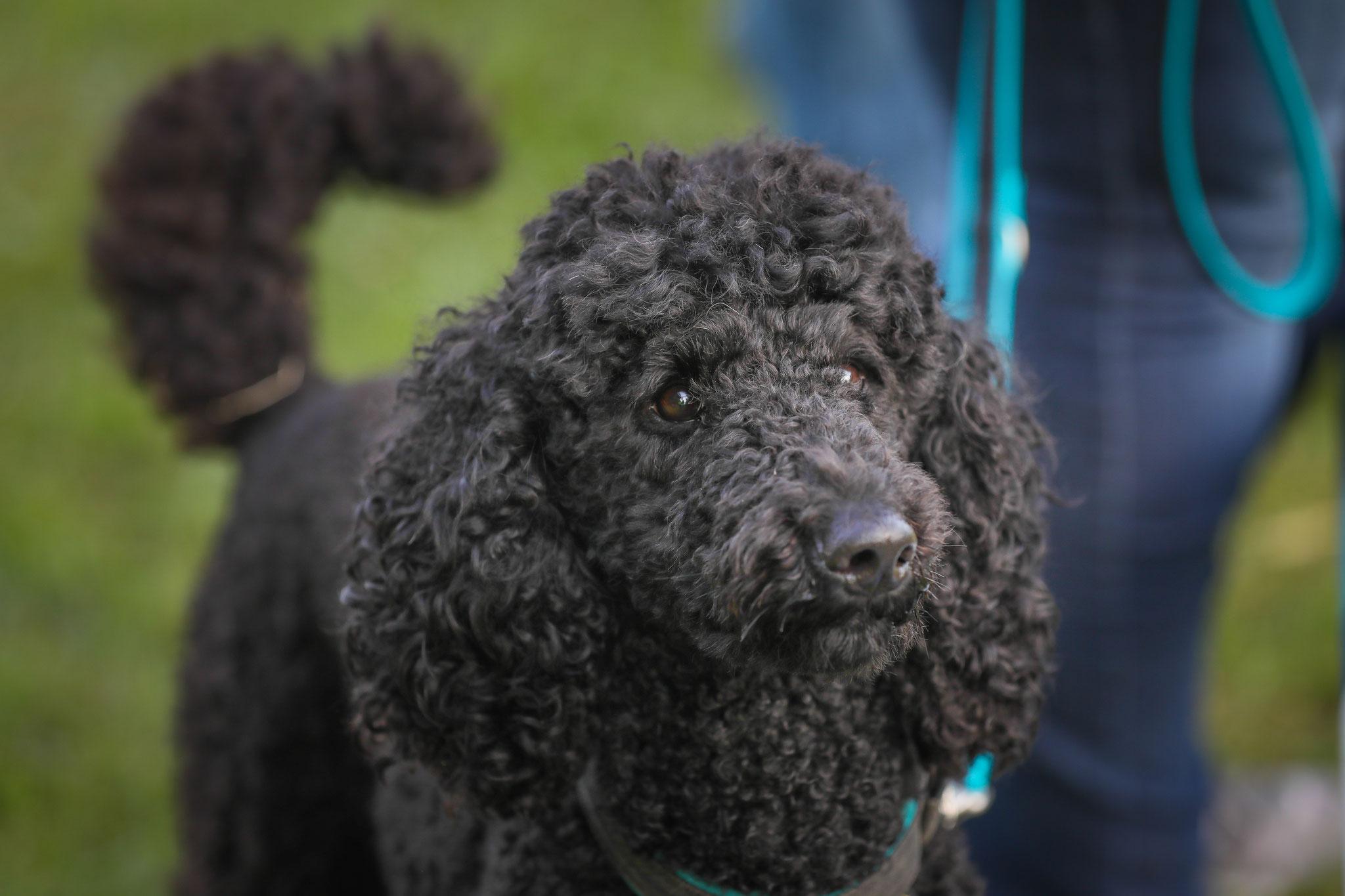 GiveMeaSmile Hunde - Schätze, Fotograf Viviane Jäger