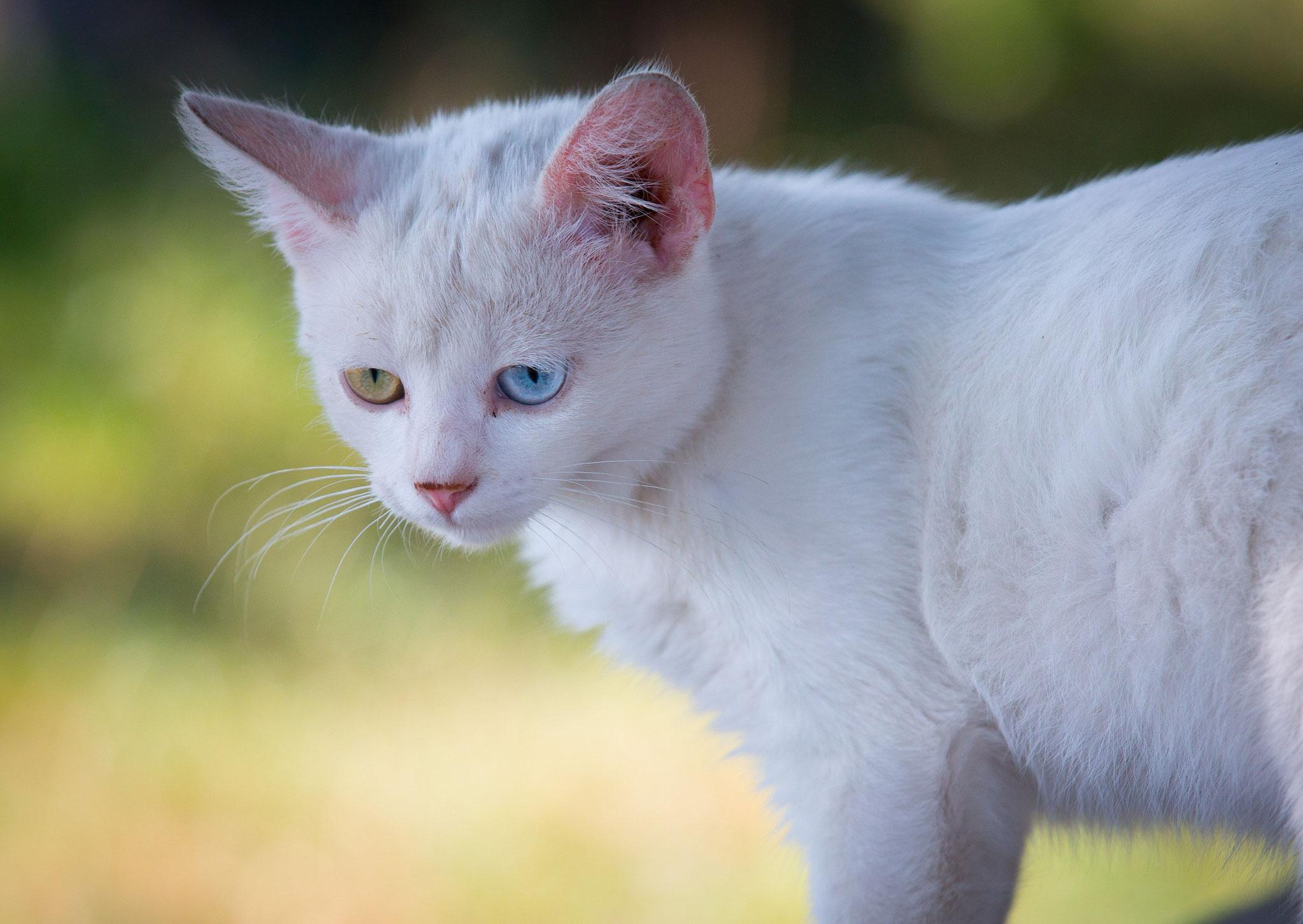 Givemeasmile - Katze - Fotograf Viviane Jäger