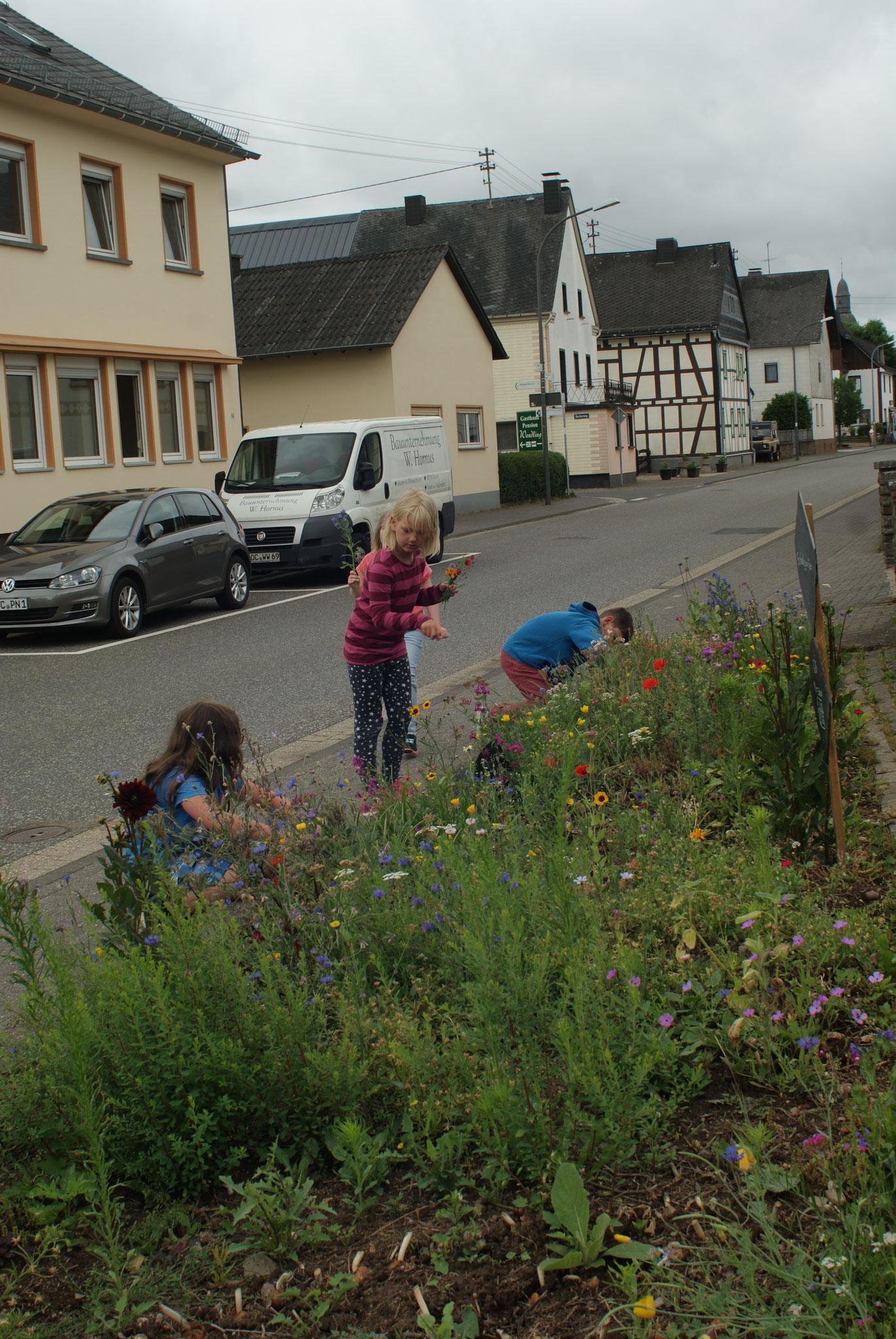 Blumen im neuen Schulgarten