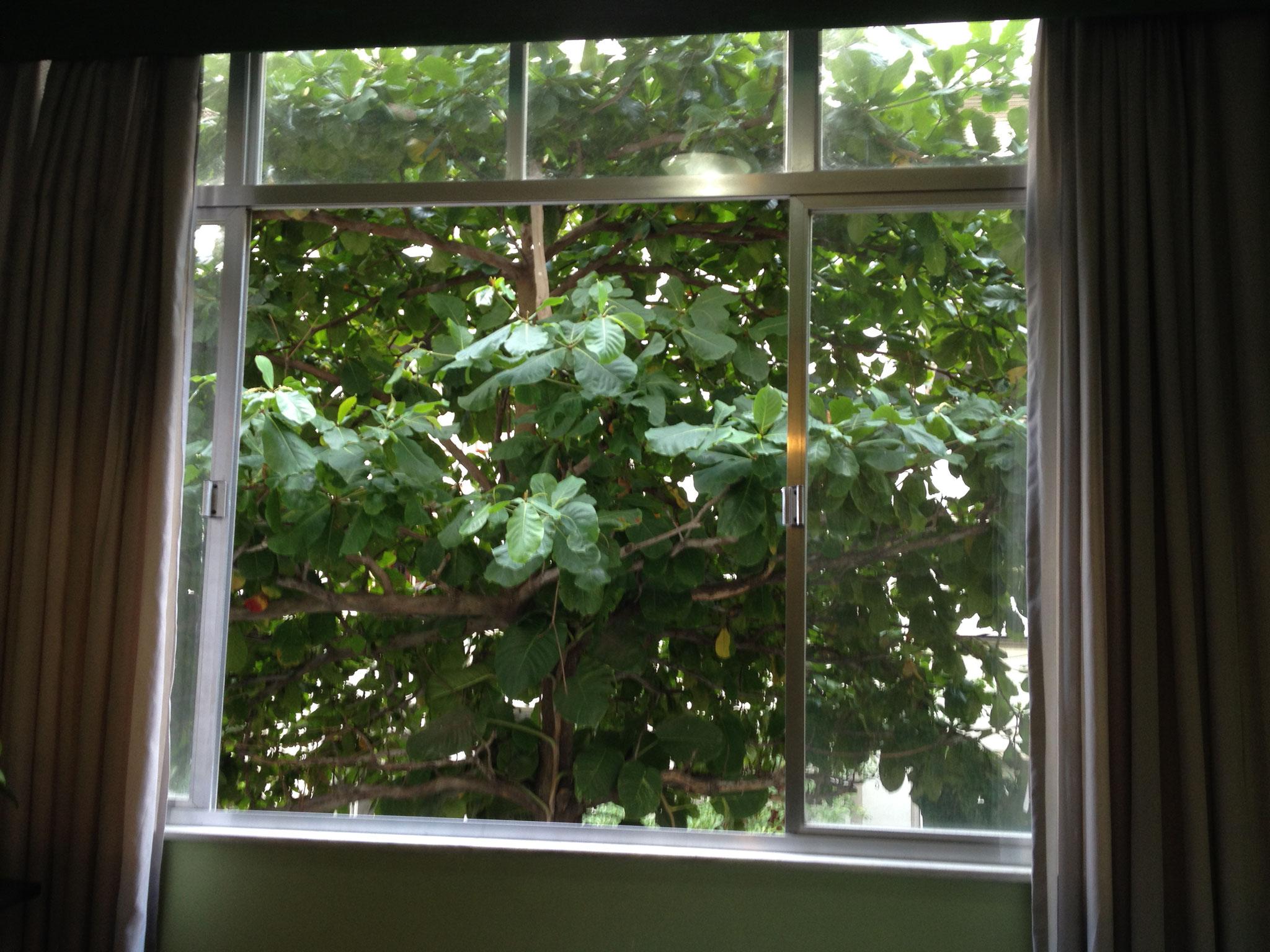 Verandafenster