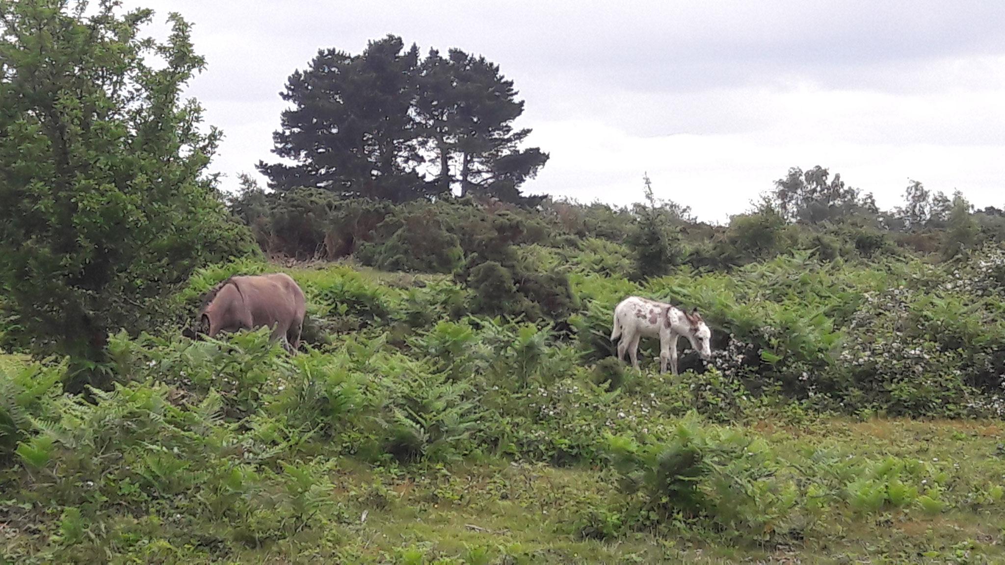 endlich ein paar Ponys gesichtet ...