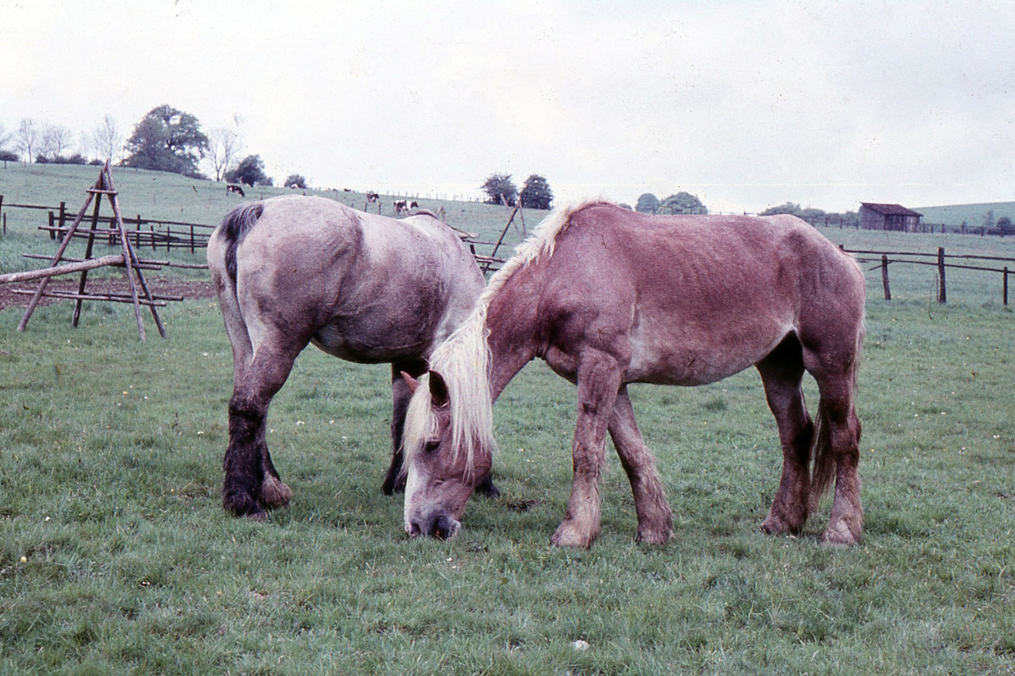 2 PS fürs Pferdefuhrwerk