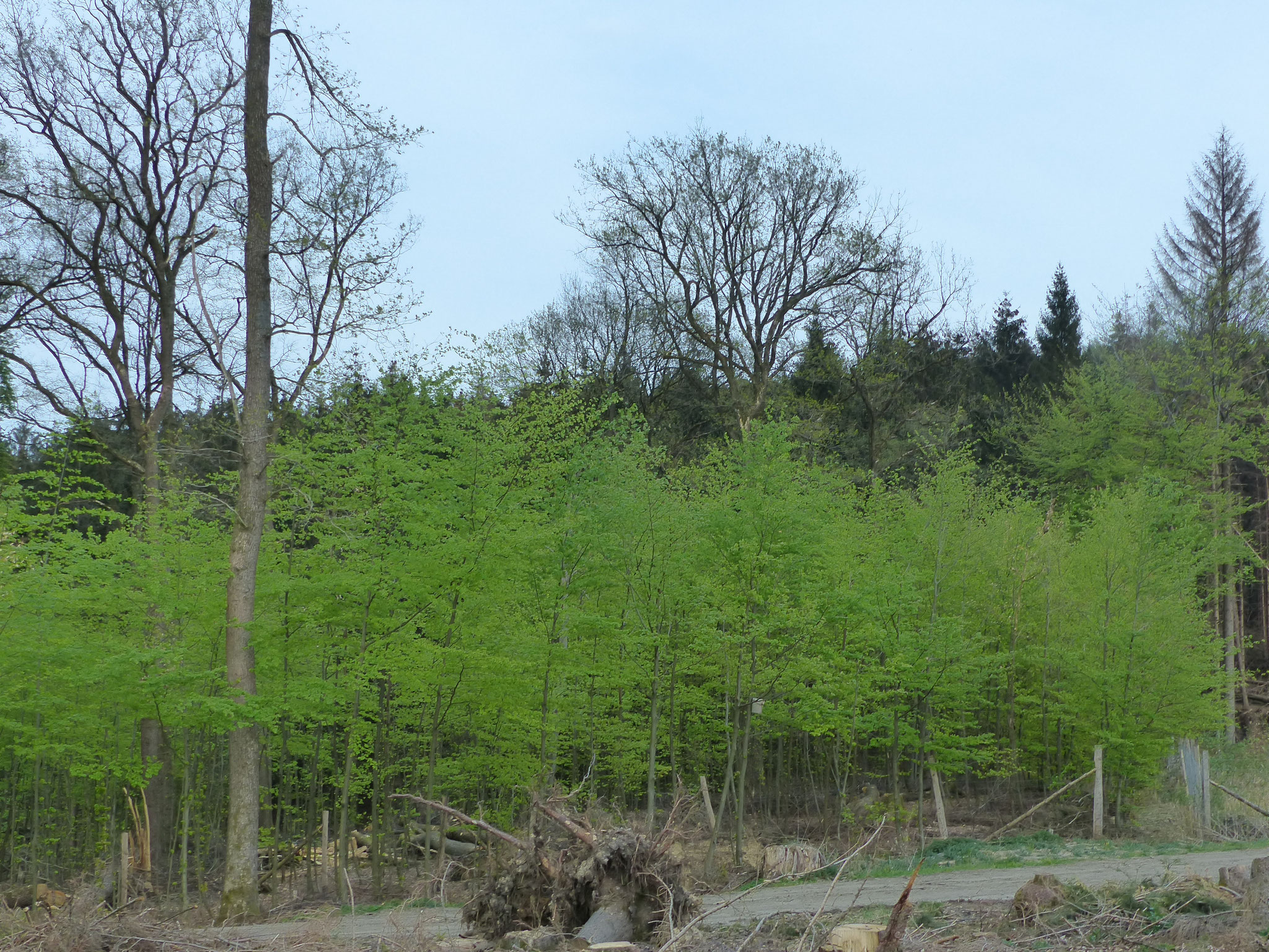 Frühling im Arnsberger Wald