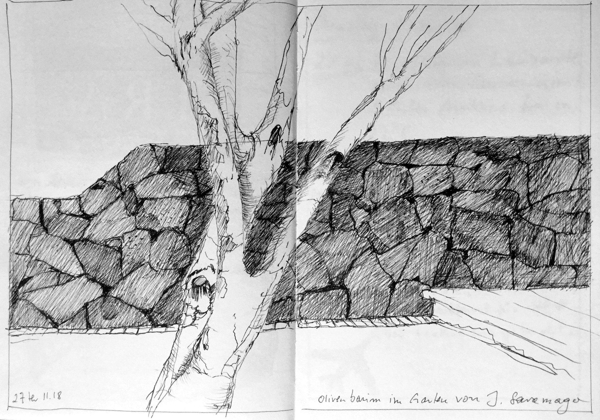© 2018 Skizzenbuch Lanzarote, OLivenbaum im Garten von J. Saramago