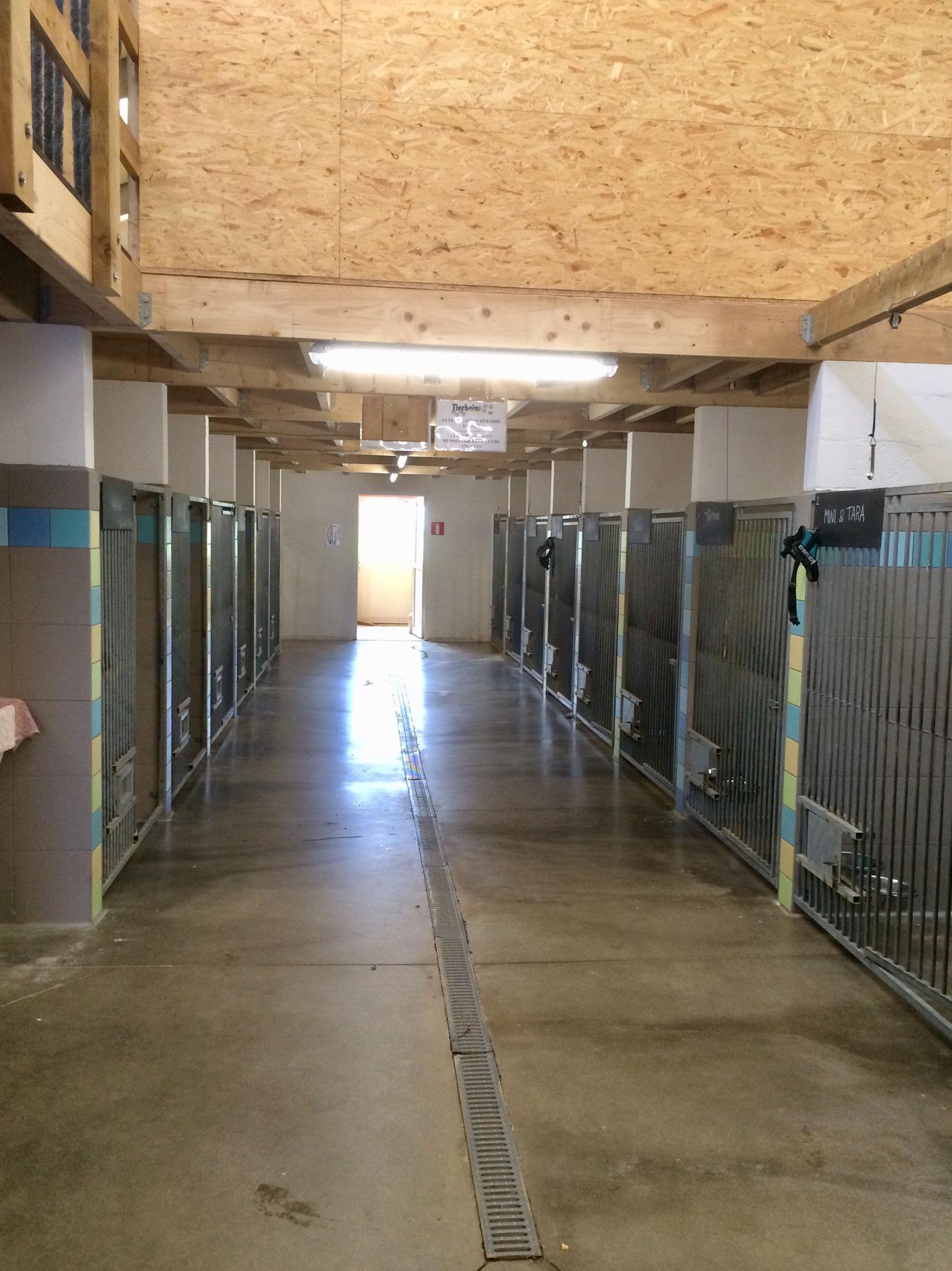 Neu gemauerte Zwinger. Vorher hatten wir Zwinger komplett aus Gittern. Diese gemauerten und gefliesten Zwinger sind leichter sauber zu halten und gleichzeitig ein guter Sichtschutz für die Hunde.