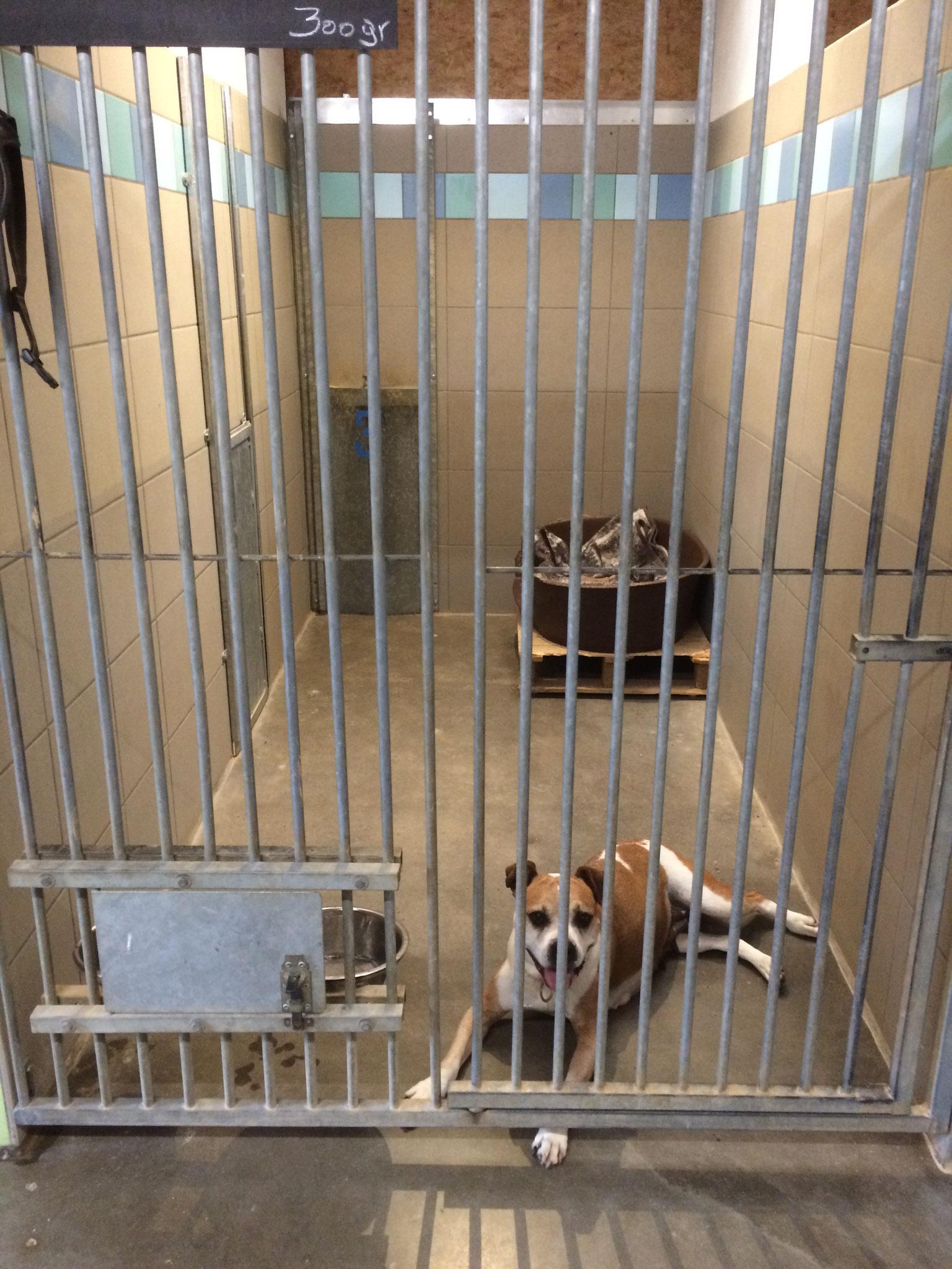 Cheyenne dans sa nouvelle cage.