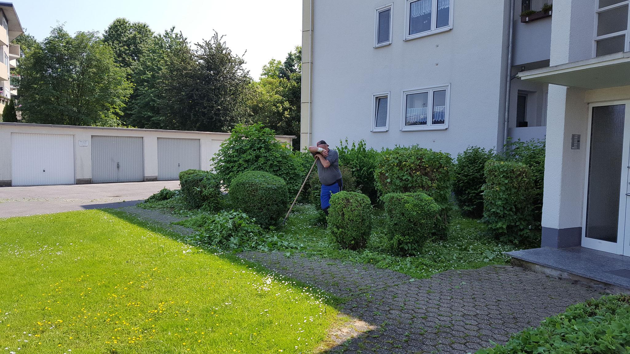 Gartenpflege Aachen schneidet die Sträucher im Auftrag einer Hausverwaltung