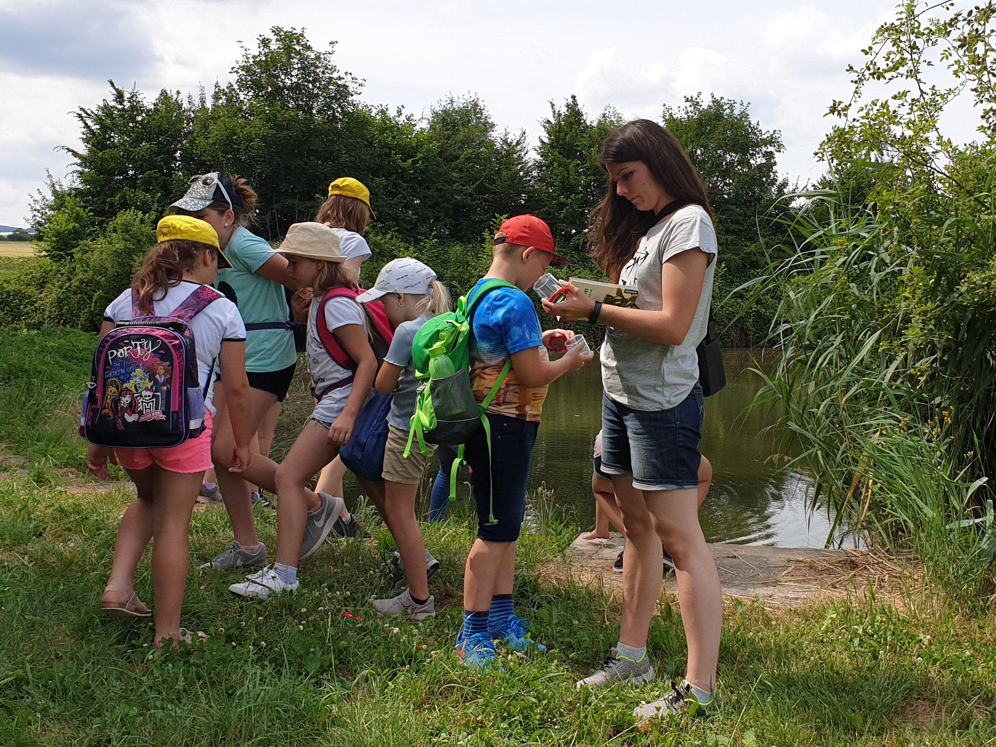 Katharina zeigt uns die Welt der Insekten am Wasser