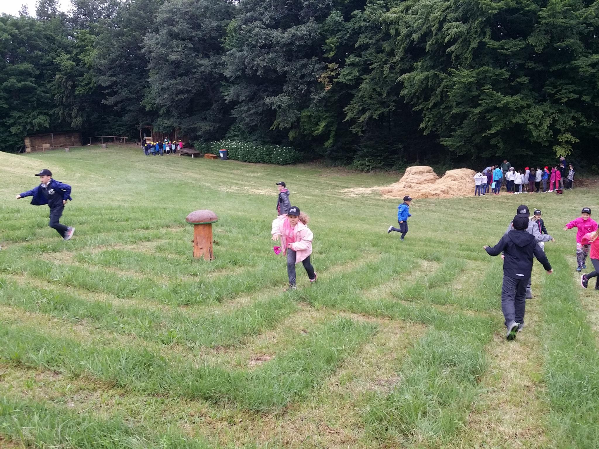 im Gras-Labyrinth