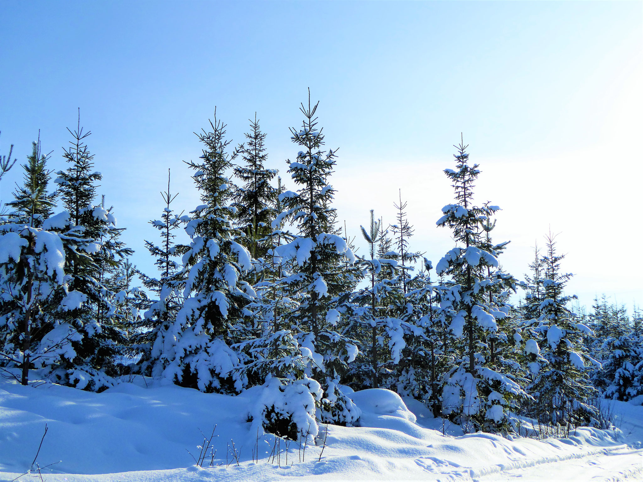Discover your Winter Wonderland in the polar forest around the house and Sysmä ...