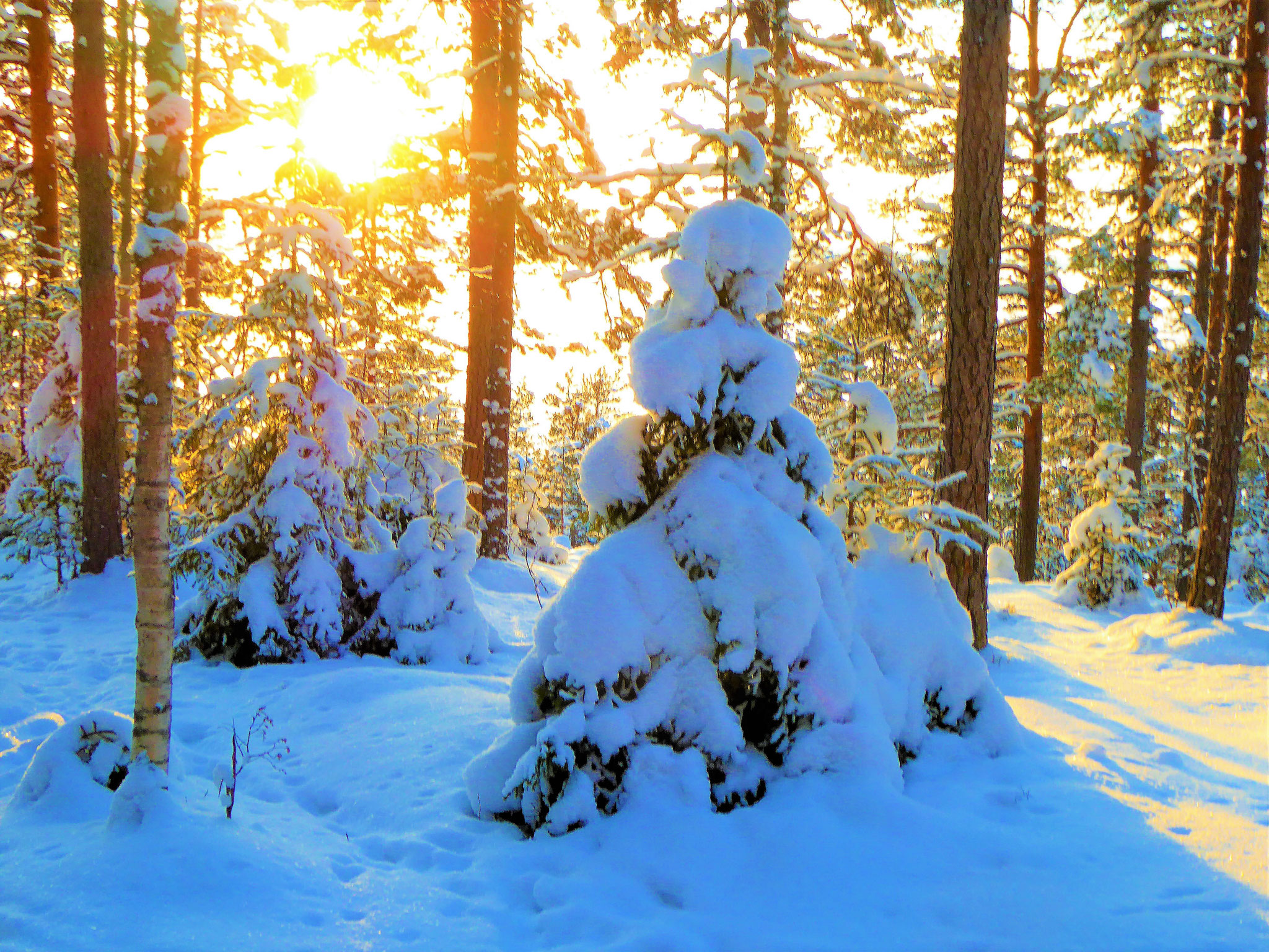 ... and enjoy sunny winter panorama