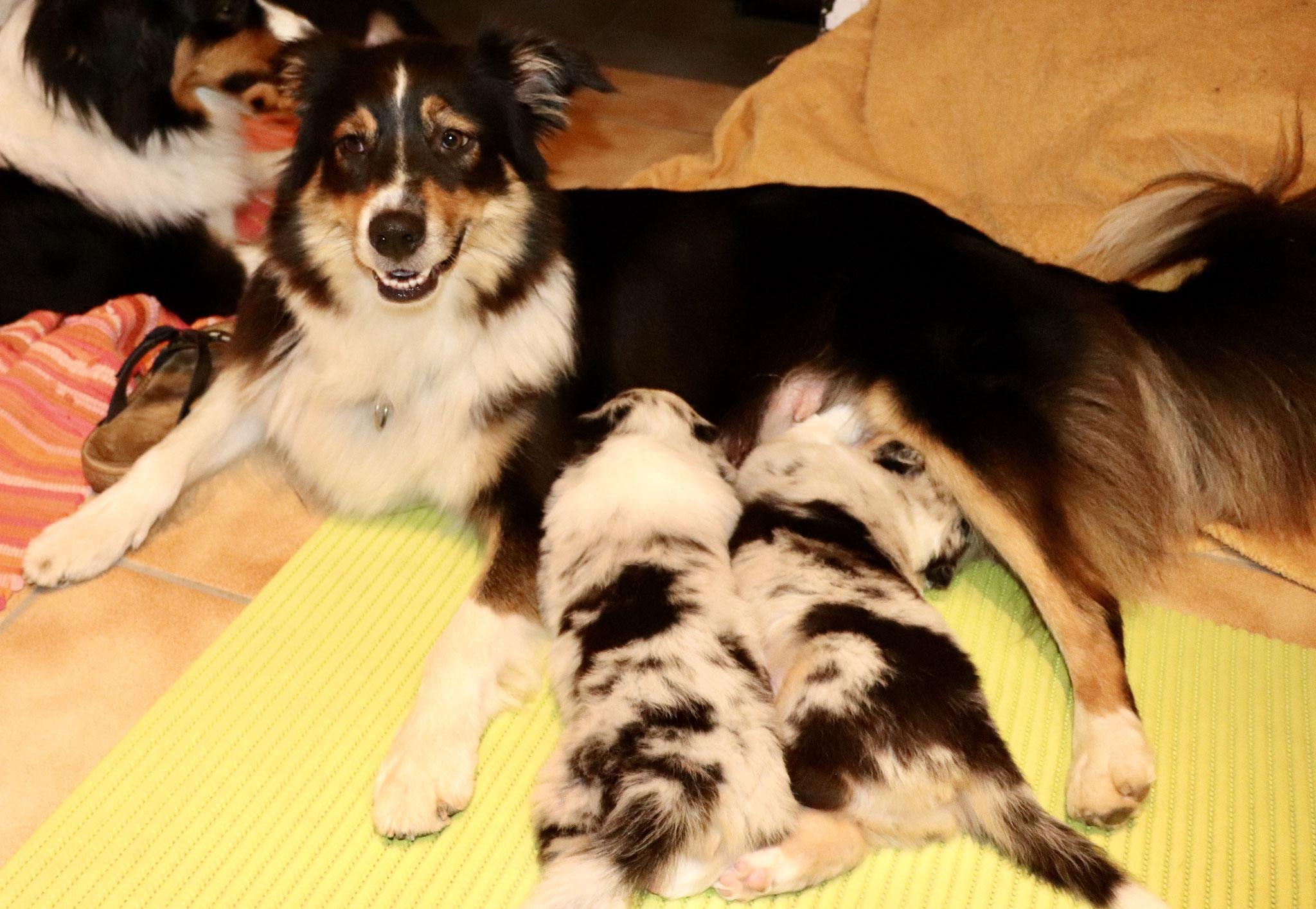 4 Wochen alt: neugierig, frech, knabbern alles an, verfressen, verschmust...