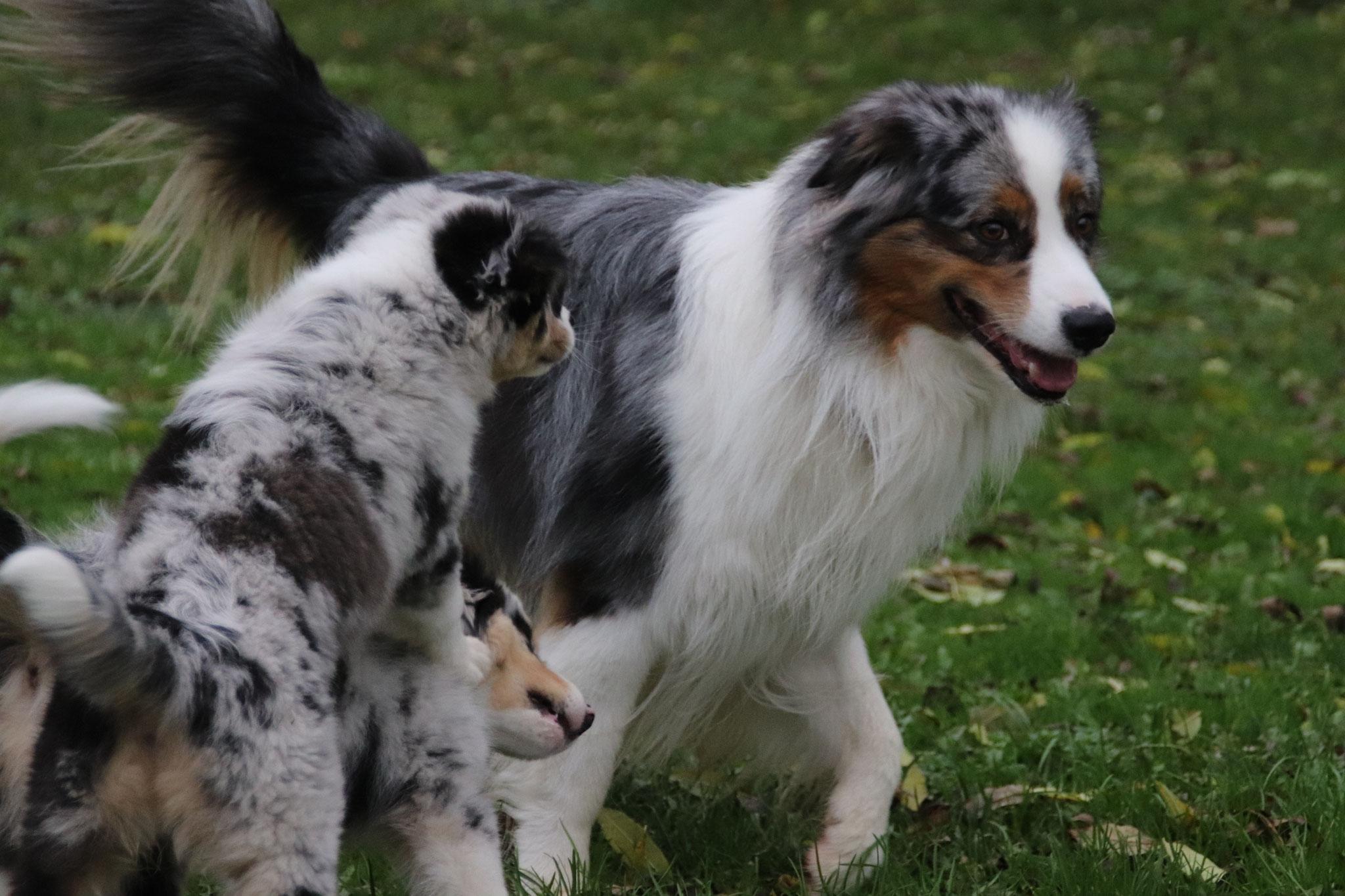 4.11.2020 - Mit Papa Panache auf Hundeplatz