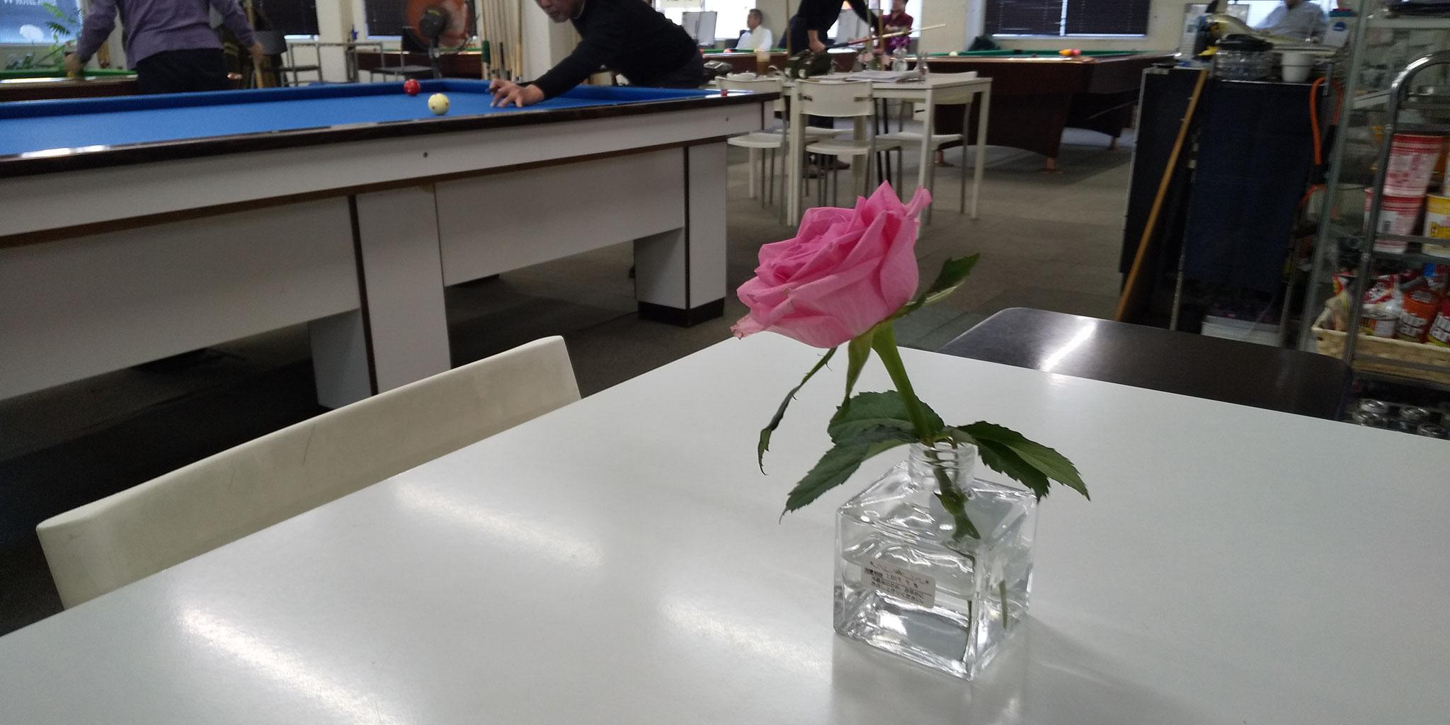 ワラビーに薔薇があるときー