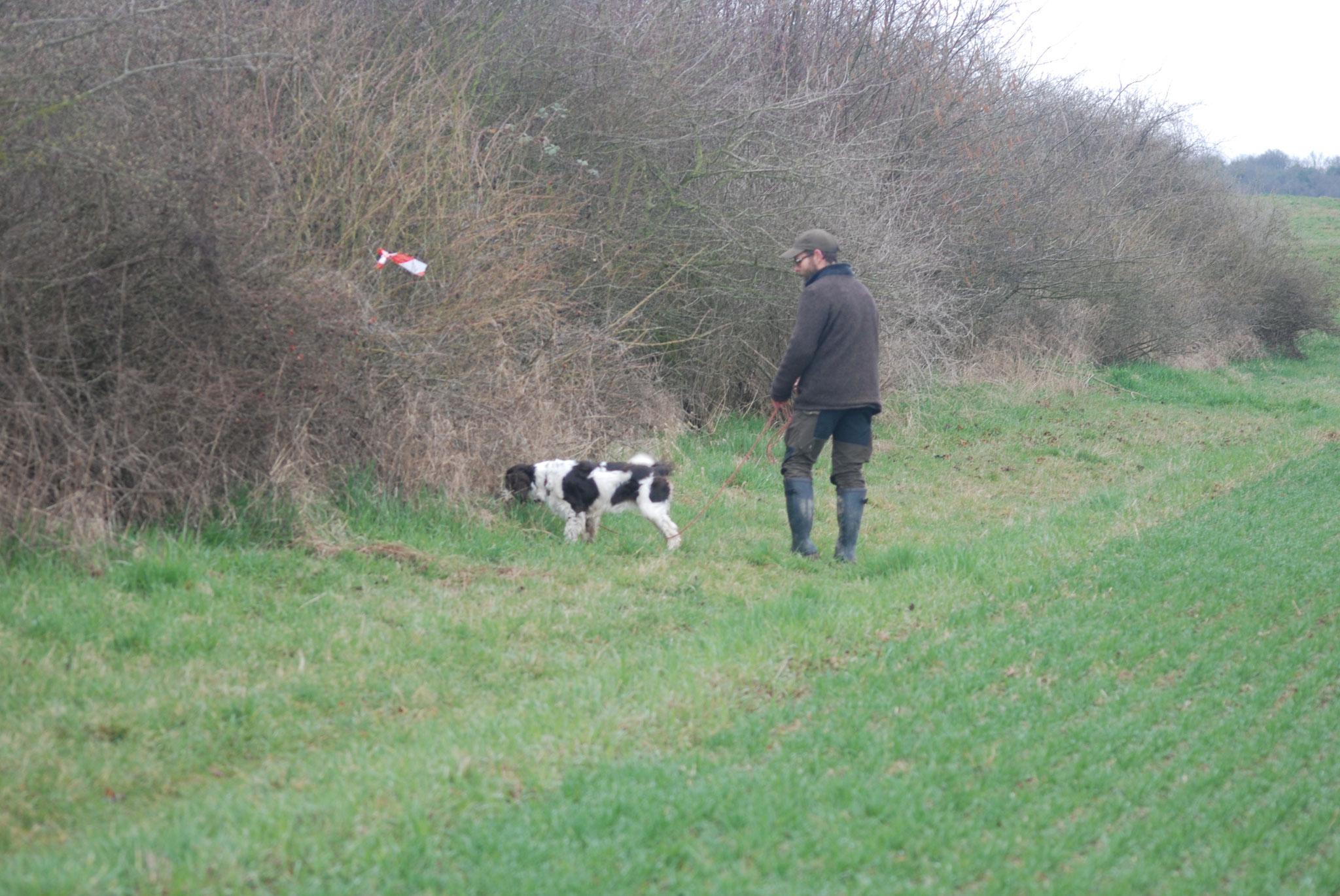 Auch die Springer Spaniel Hündin hat eine feine Nase und findet den Fasan.