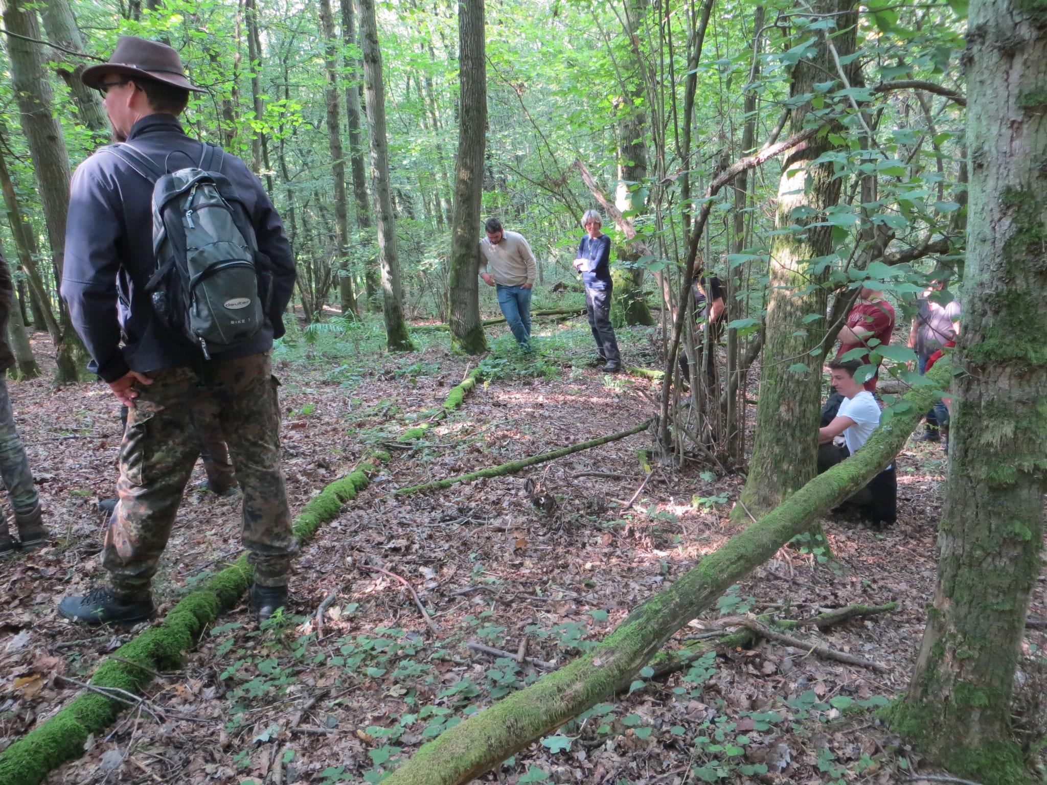 Die Jungjägeranwärter haben sich im Wald versteckt, um den Hund nicht zu irritieren.