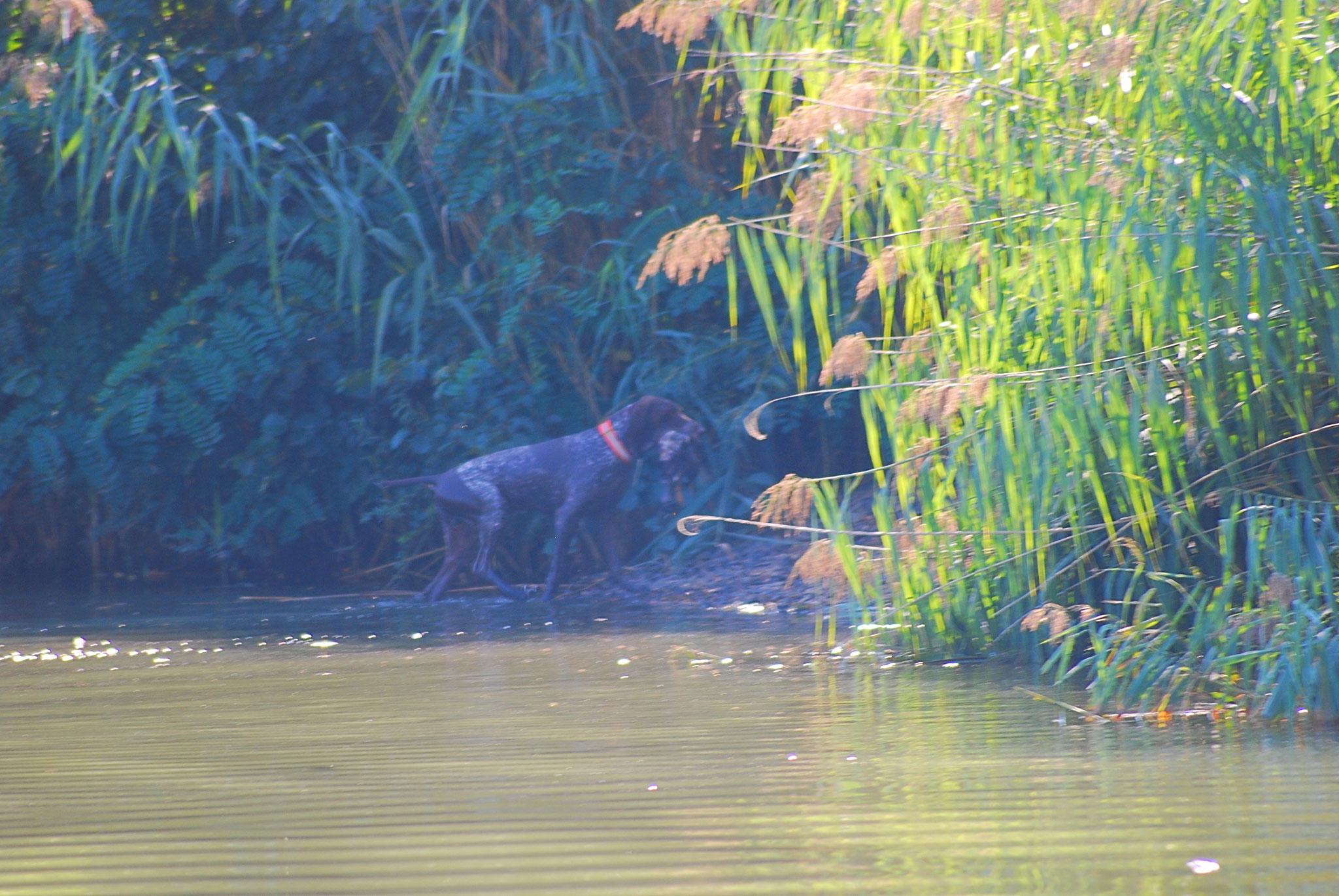 Der 12jährige Iltis arbeitet immer noch zuverlässig am Wasser.