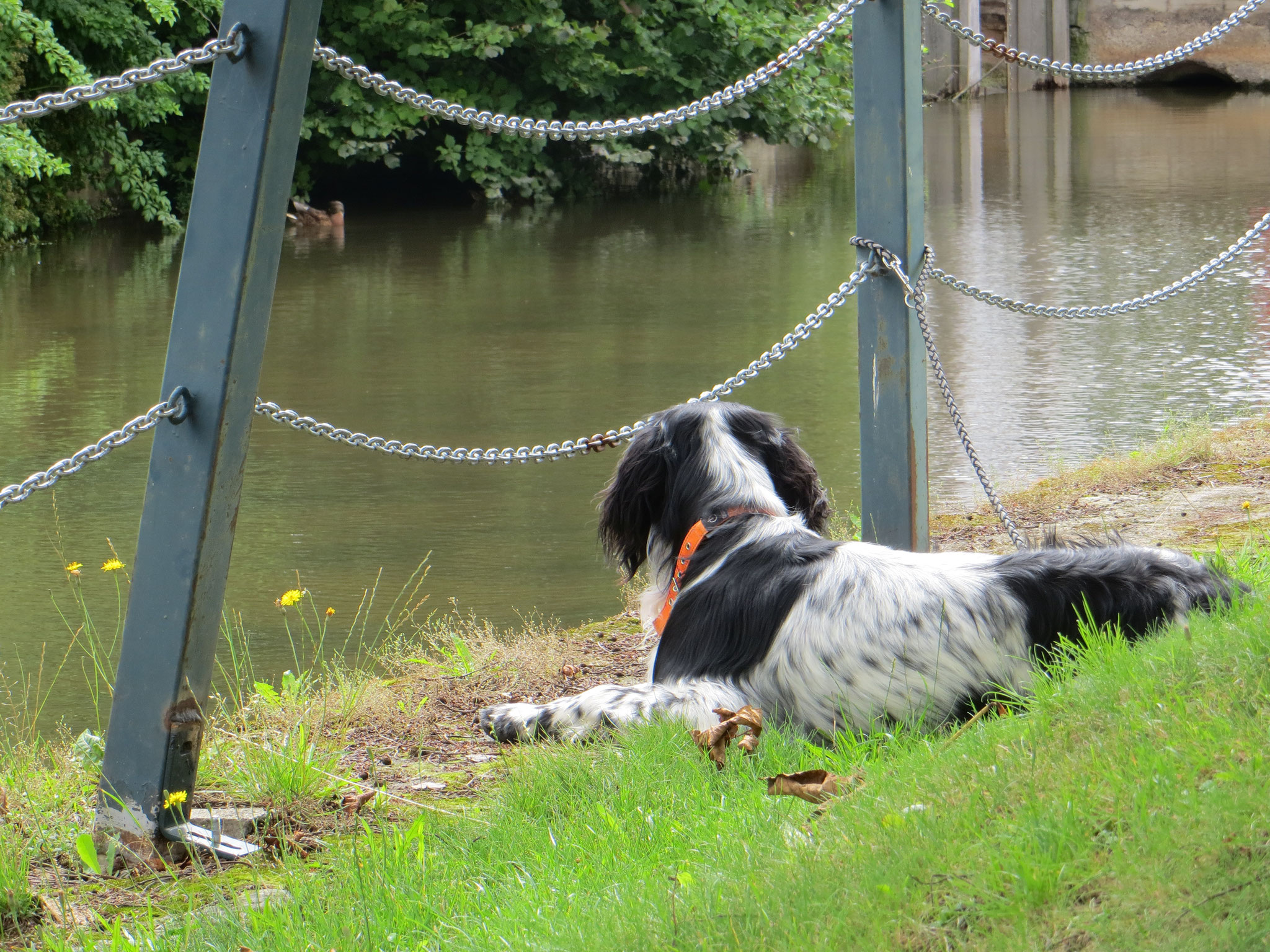 GM Bajan beobachtet die Enten.
