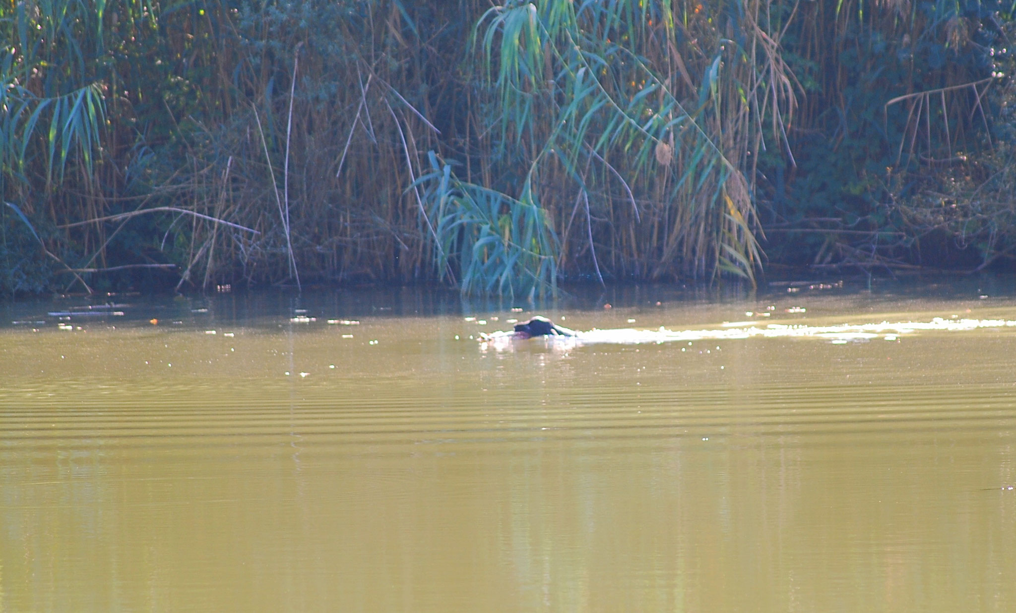 Big Boss bei der Überprüfung der Schußfestigkeit am Wasser...