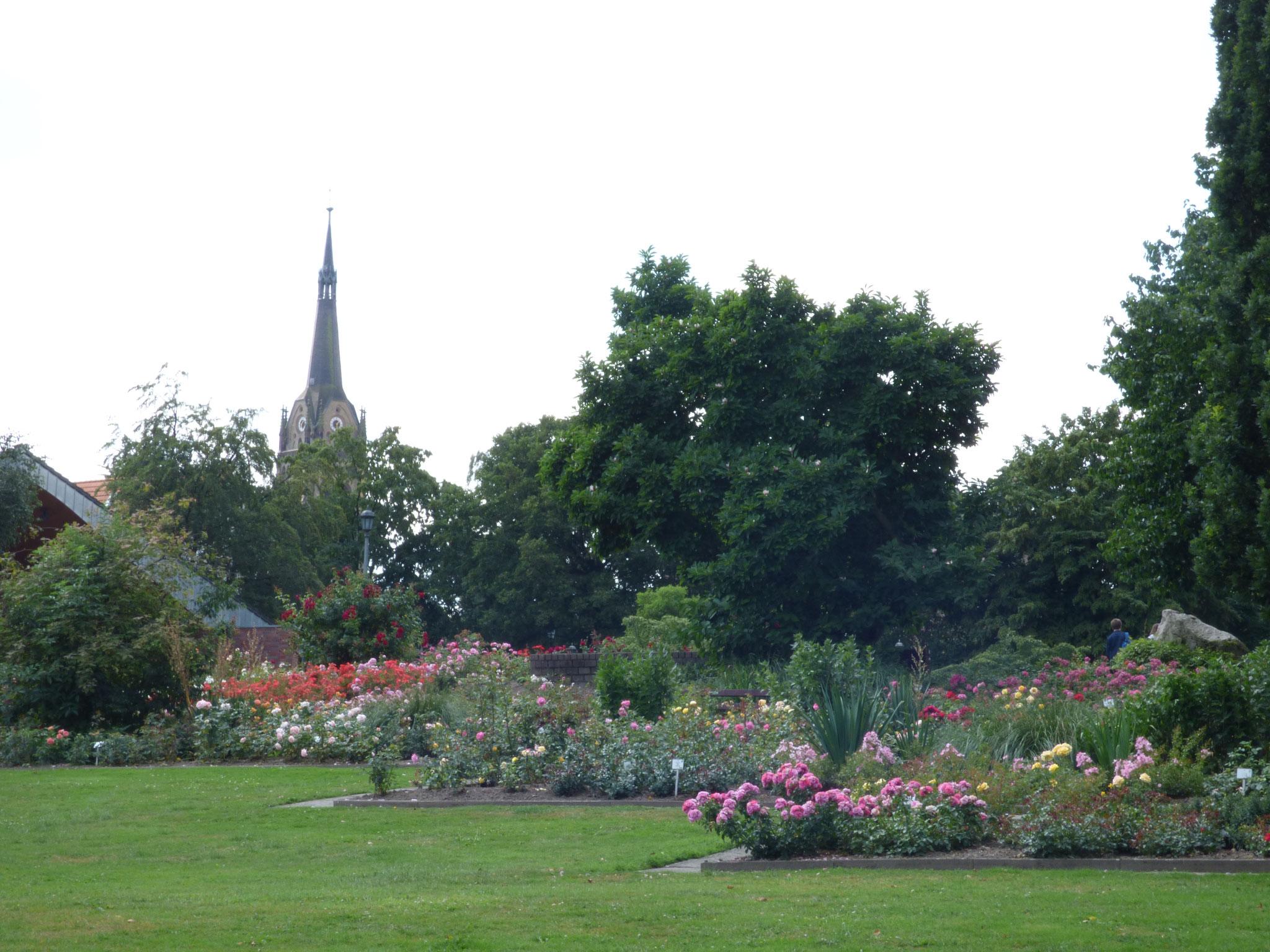 le parc de la roseraie