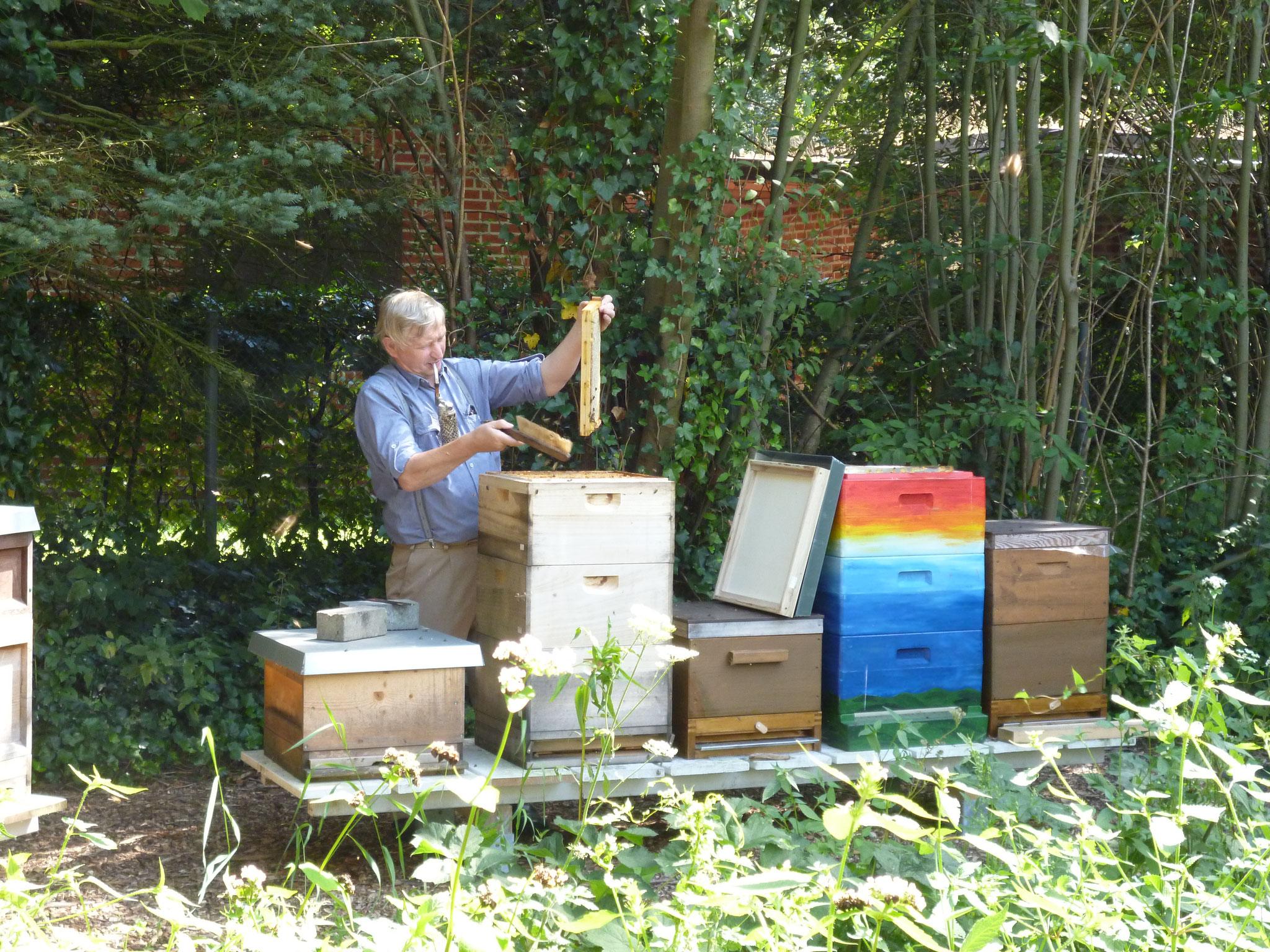 Les ruches du jardin bio