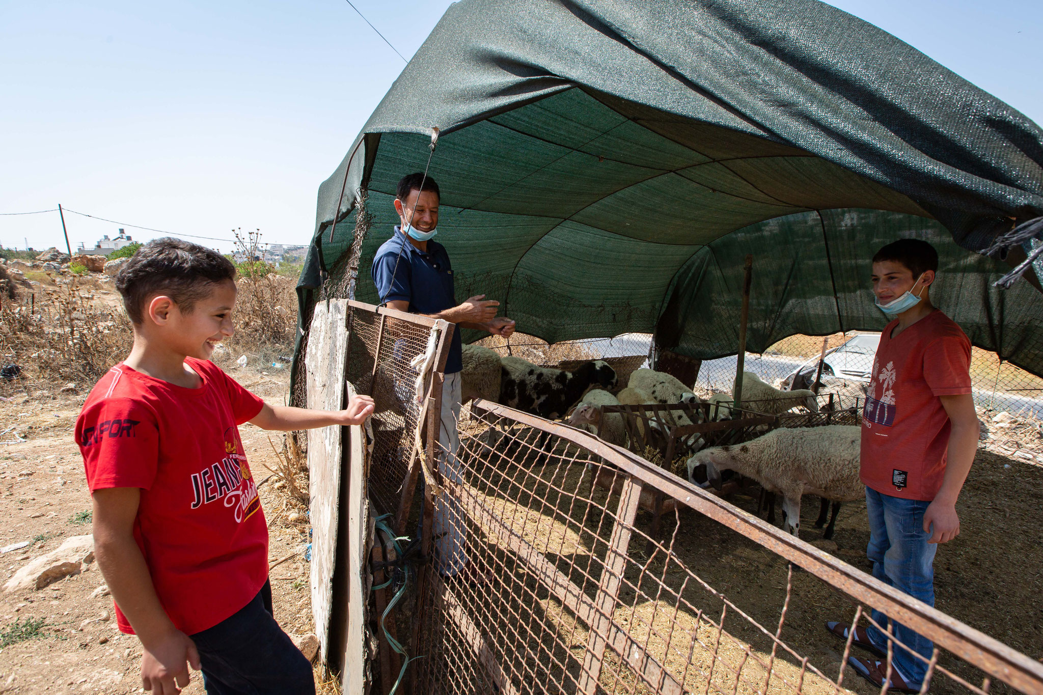 Sich um die hauseigenen Schafe zu kümmern, ist bei Familie Dar Mohammed Aufgabe der Söhne und des Vaters. Foto: Andrea Krogmann