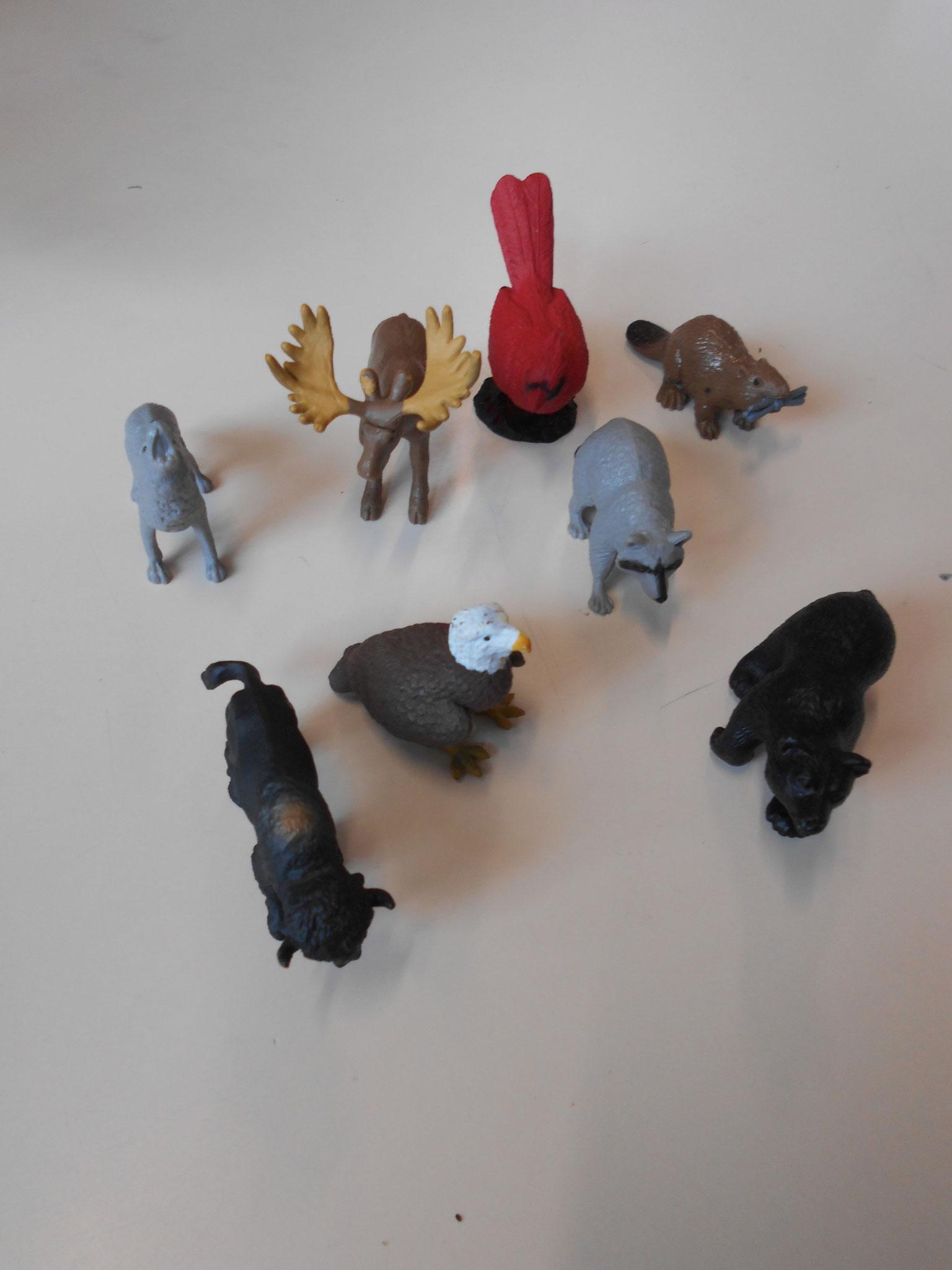 animaux de l'Amérique du nord