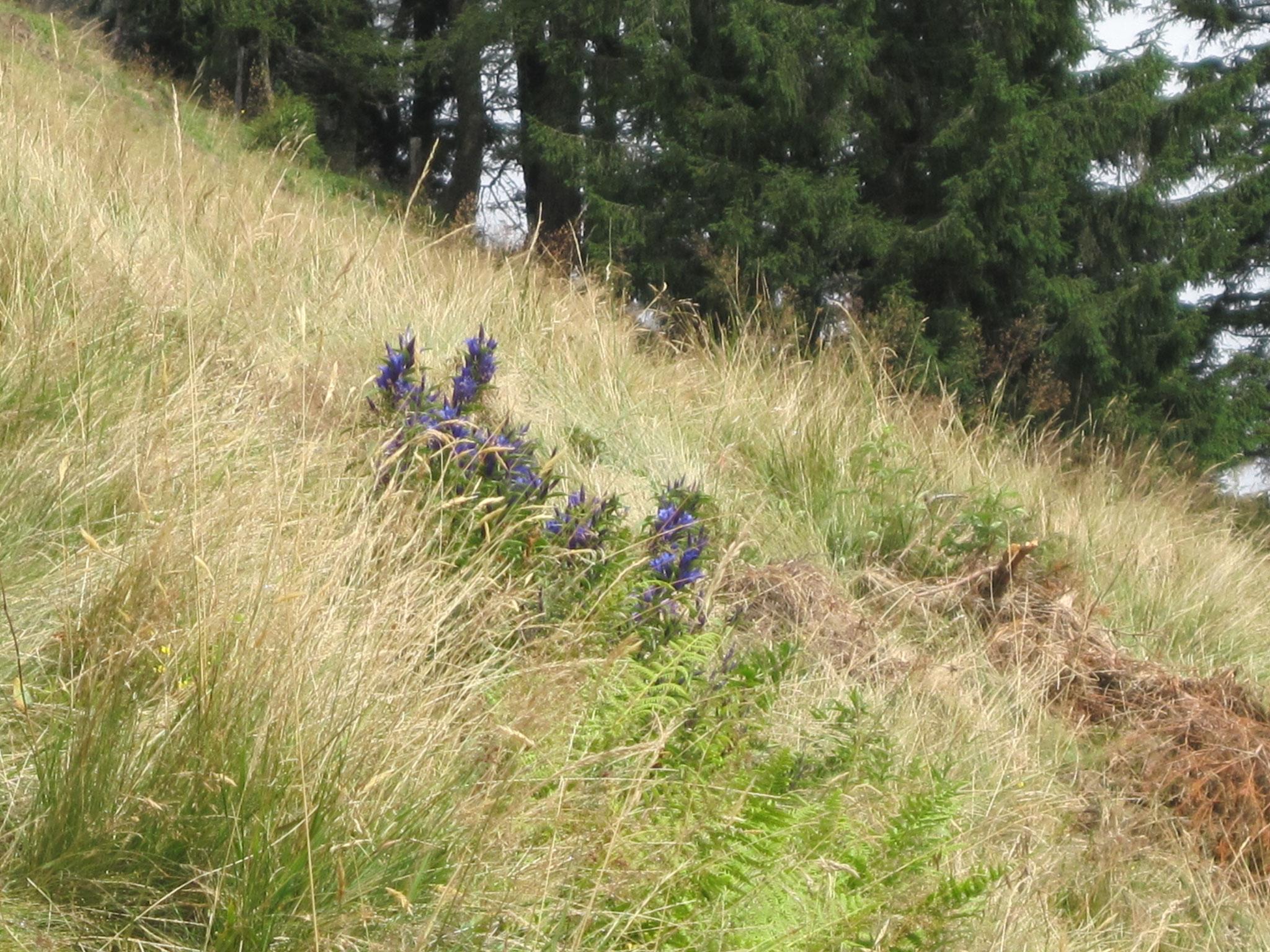 Gruberhof Fischbachau - Bergblumen