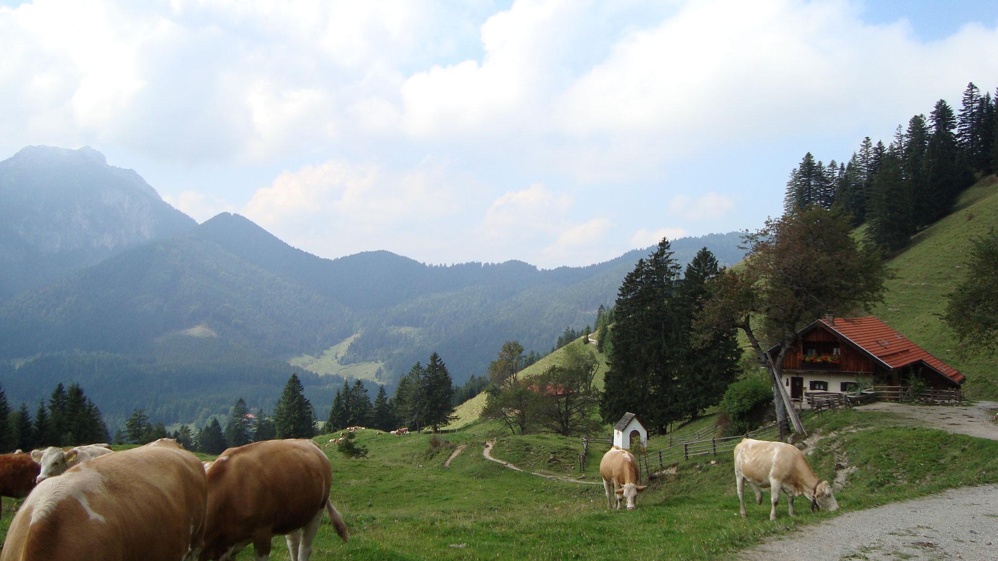 Gruberhof Fischbachau - Hansenalm