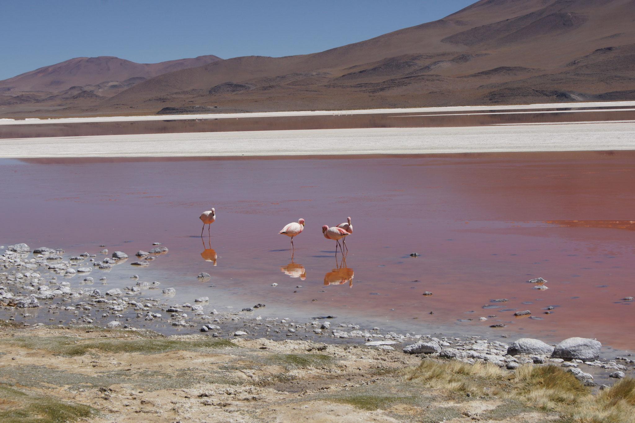 Privat geführte Reisen durch Bolivien - Laguna Colorada bei Uyuni