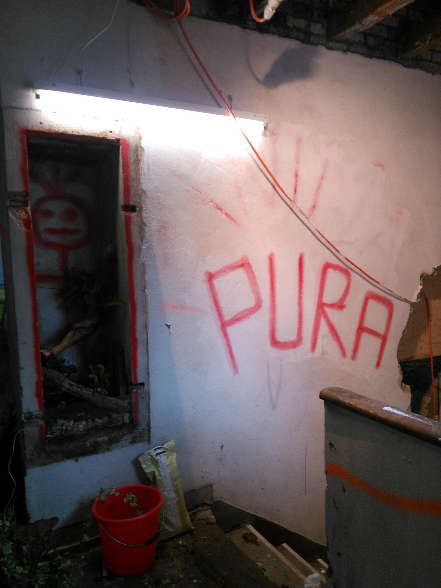 """Das im Haus vorgefundene Graffiti """"Anima Pura"""" wird restauriert"""