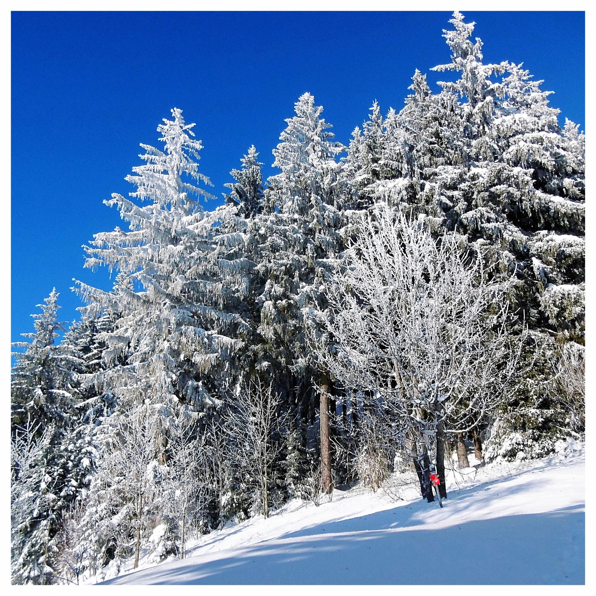 Winterwanderung im Allgäu