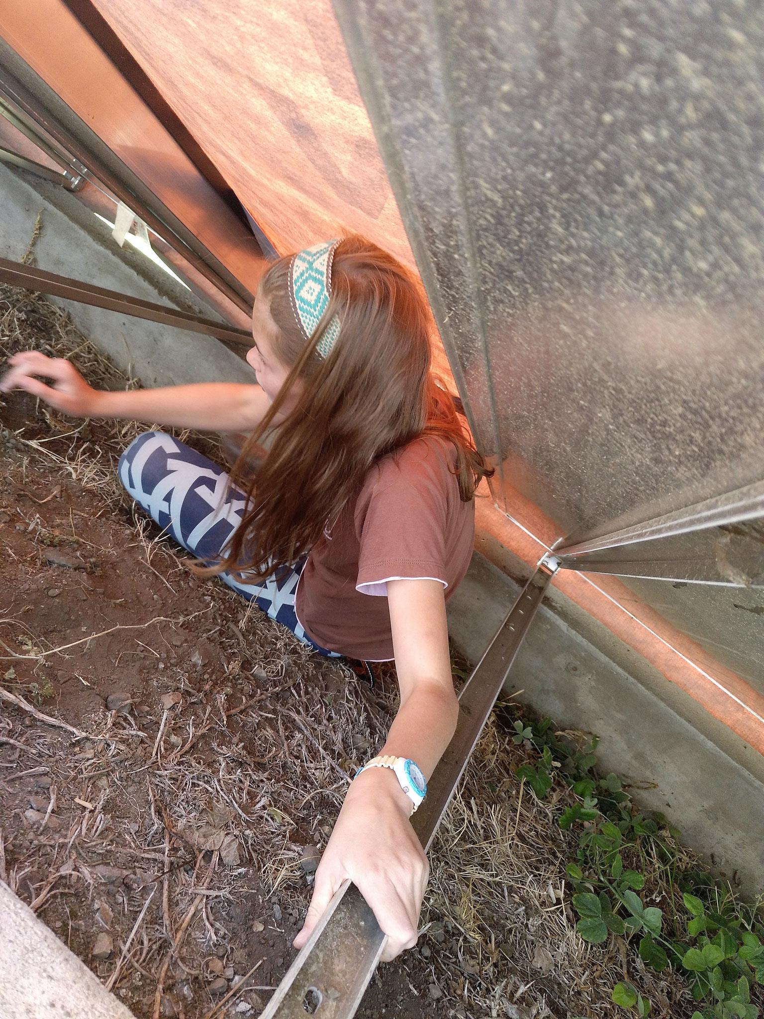 Dann hat ein Mädchen, die Welpen aus ihrem Versteck geholt...