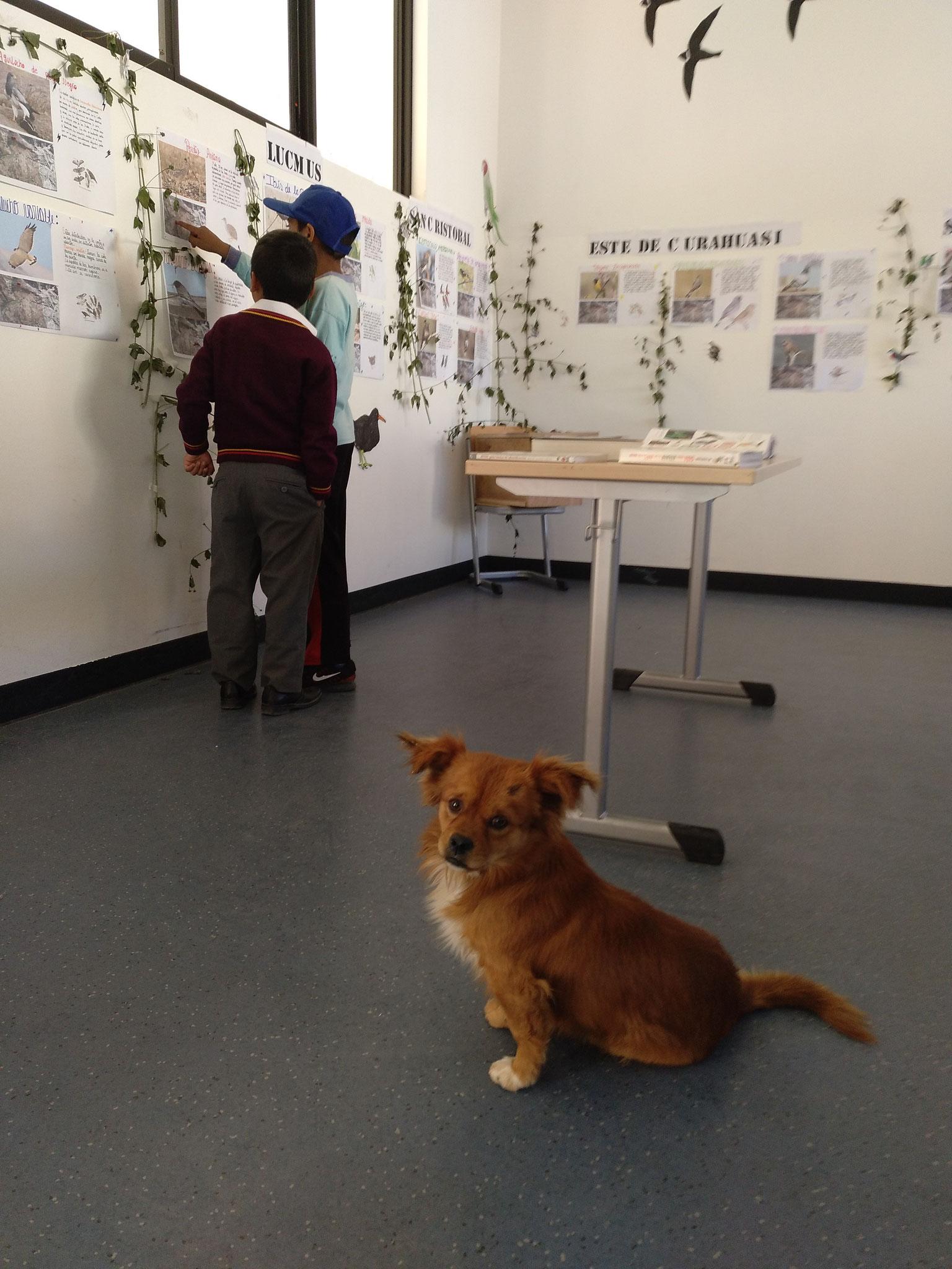 Hunde auf dem Schulgelände gibt es auch nur in Peru.
