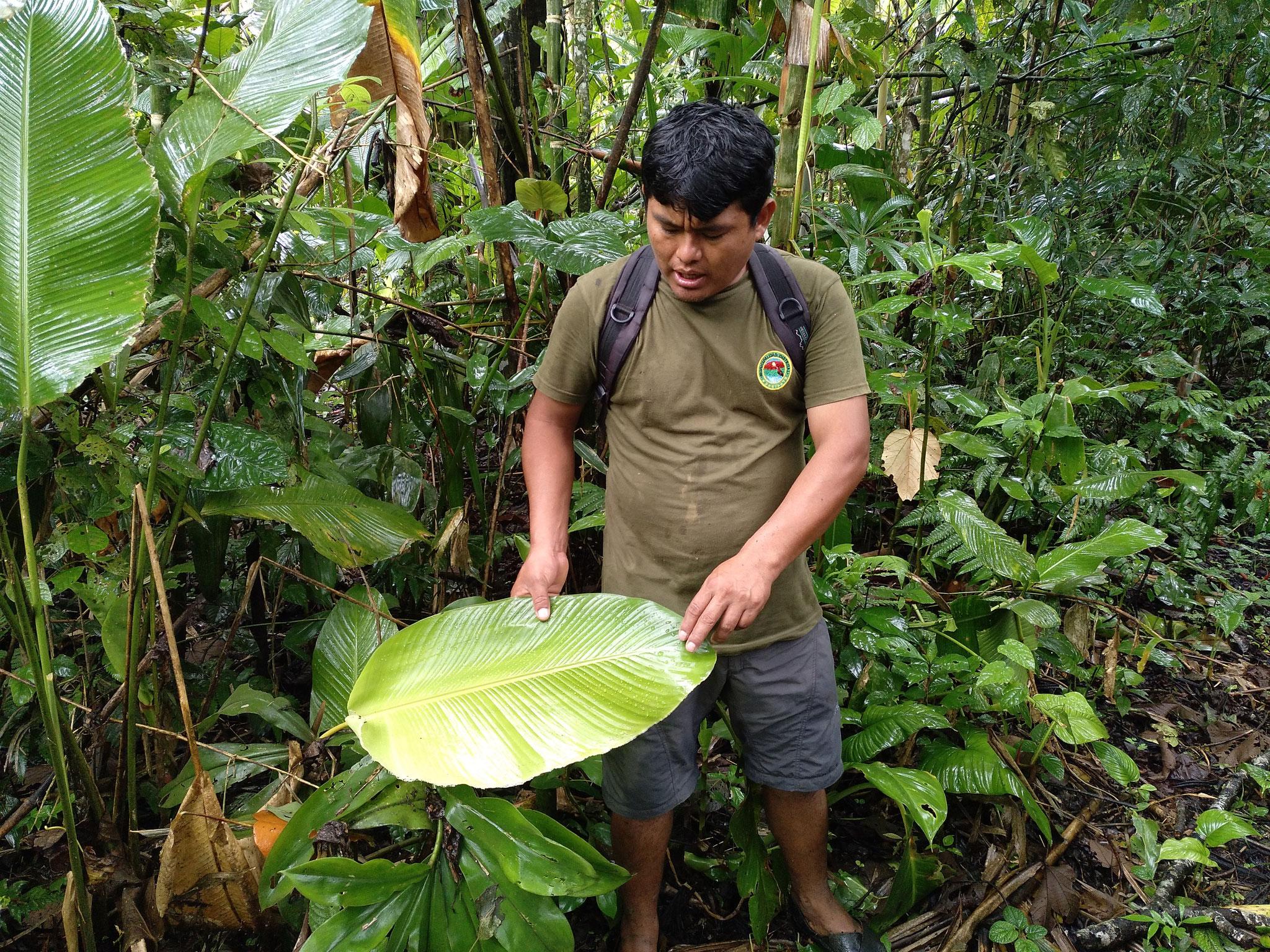 Cesar erklärt uns den Regenwald.
